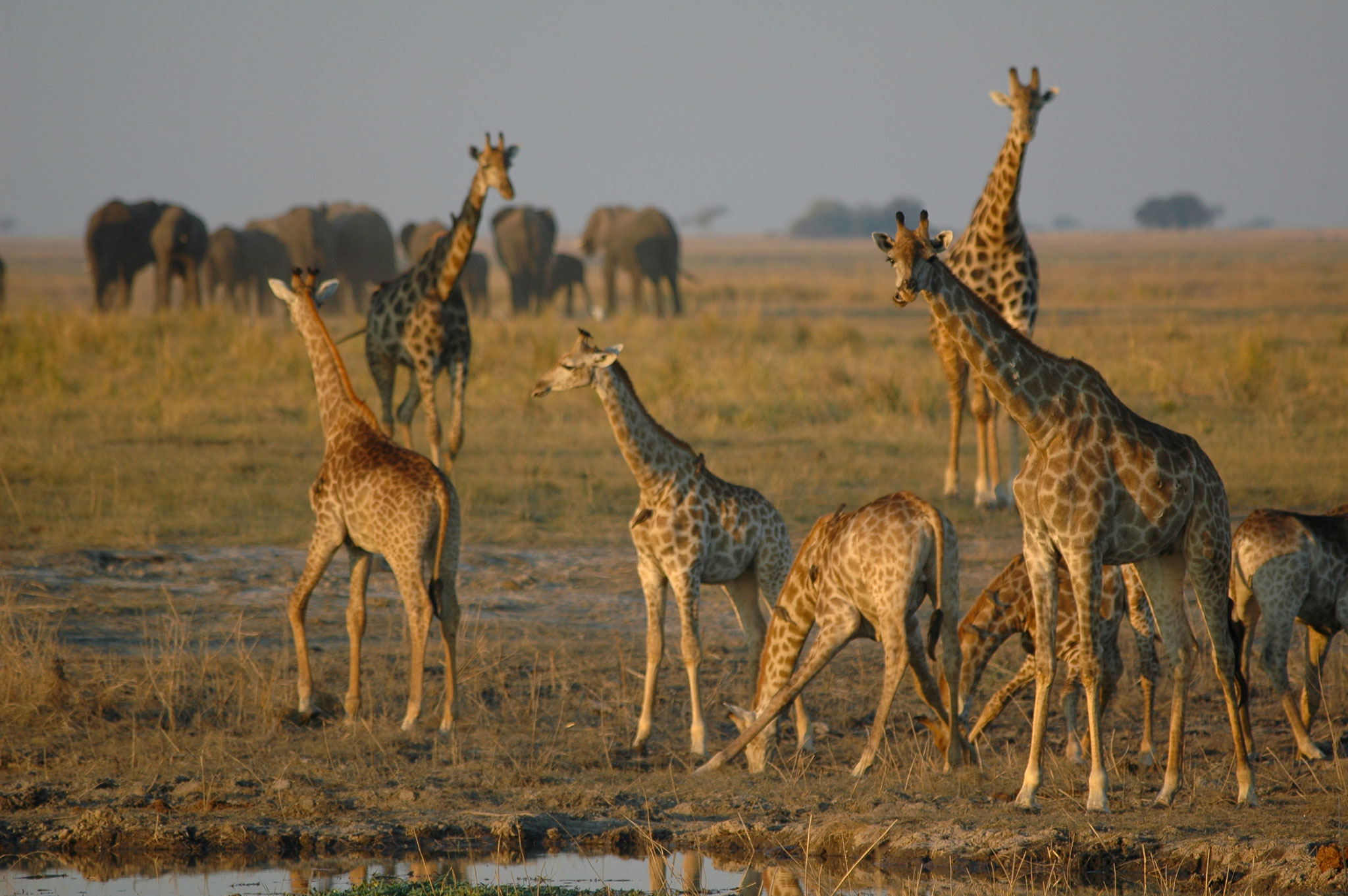Tiere auf Pirschfahrten in Botswana