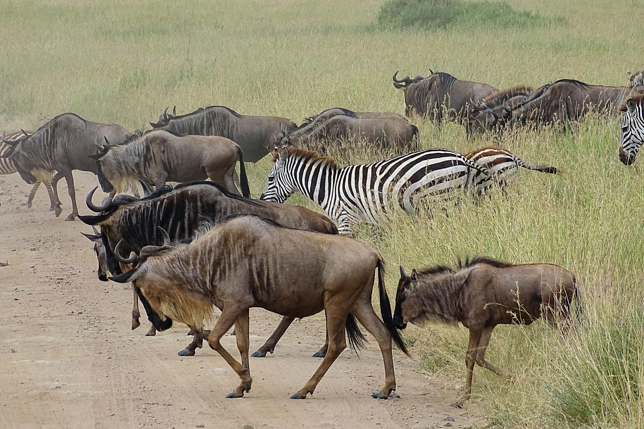 Große Tiermigration