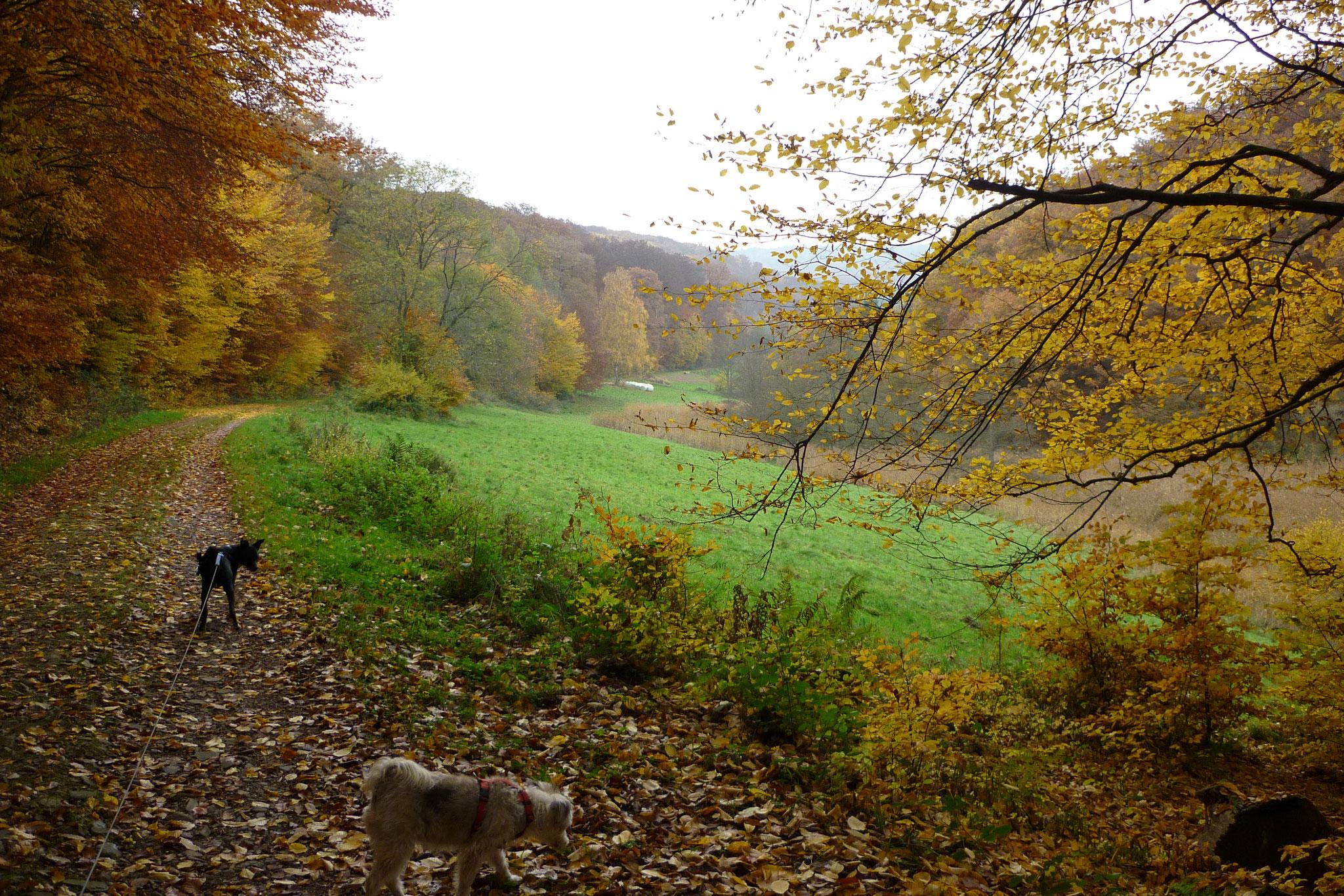 Herbst im Sülzbachtal