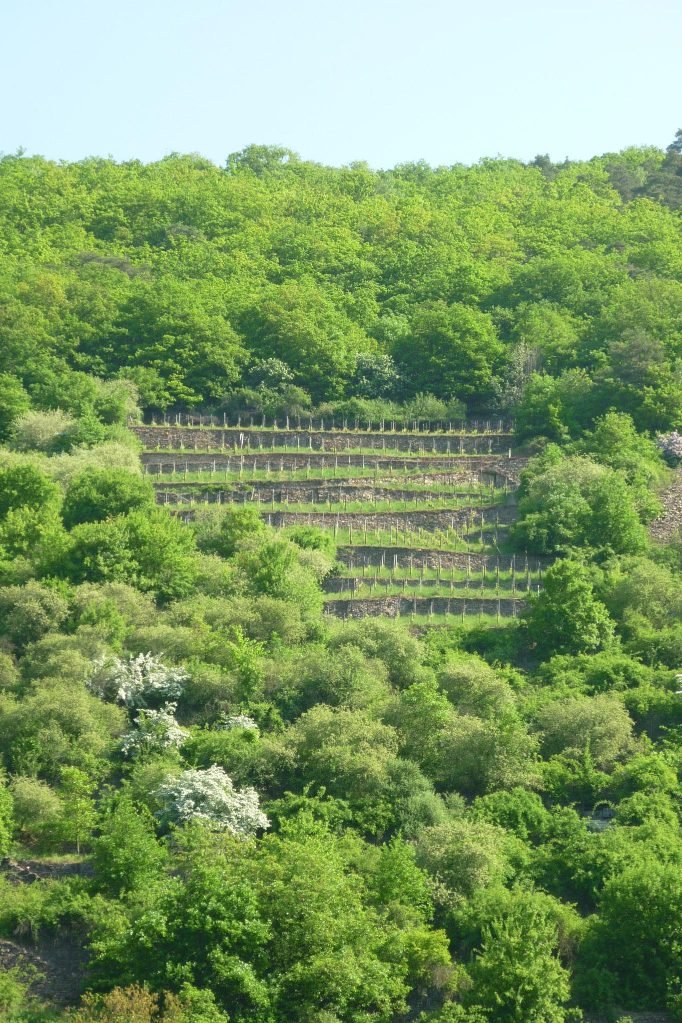Mühsam nährt sich der Weinbauer - zumindest an manchen Hängen...