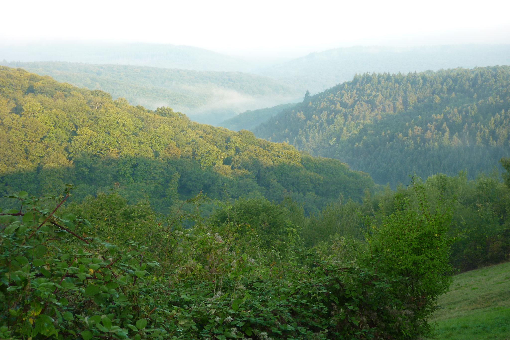Blick Richtung Sülzbachtal von der Bubenhäuser Höhe aus