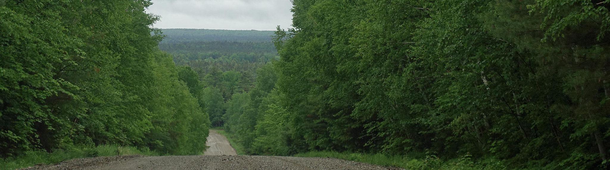 title:Atlantik-Kanada,title2:Wald mit Ufer,provinz: New Brunswick,bezirk:auf Anfrage,art:Mischwald,flaeche:10.000+ ha,ufer:>10 km,preis:auf Anfrage