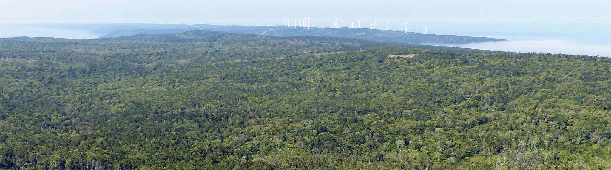 title:Weymouth Forest,title2:Wald mit Ufer,provinz:Nova Scotia,bezirk:Digby,art:Mischwald,flaeche: 1.159 ha,ufer:3.085 Meter,preis:auf Anfrage