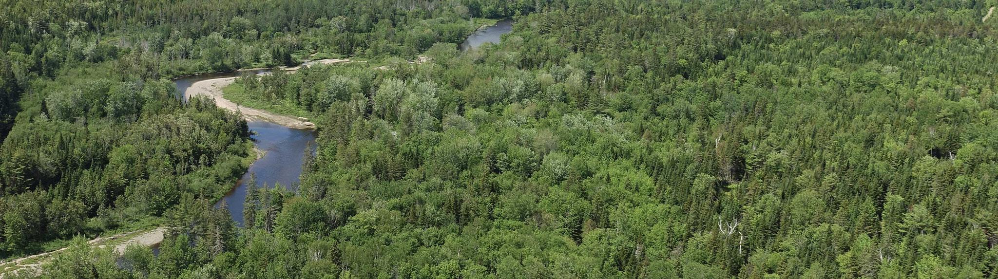 title:Blackville Forest,title2:Wald mit Ufer,provinz:New Brunswick,bezirk:Northumberland,art:Mischwald,flaeche:269 ha,ufer:1.700 Meter,preis:verkauft