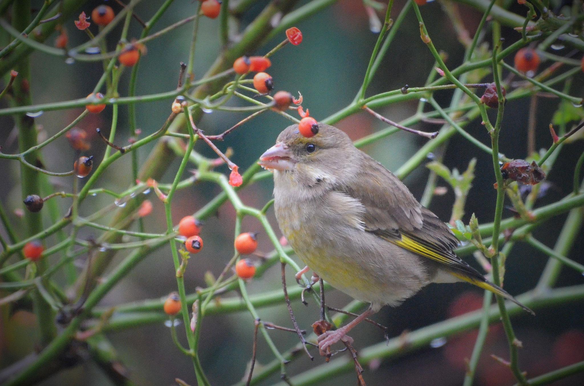 Bisous d'Amour by Creamelarosa des vitamines tout l'hiver pour les oiseaux !