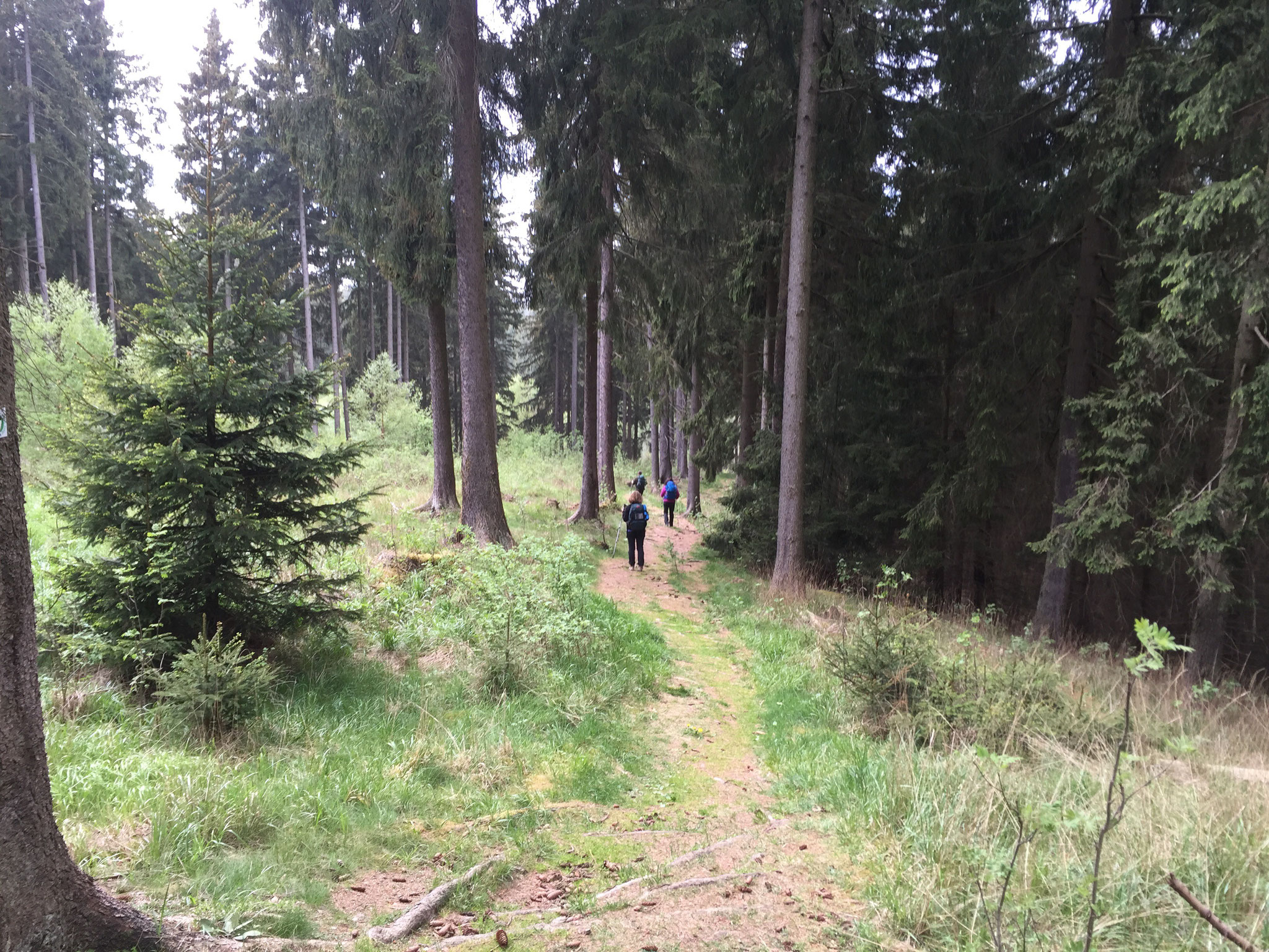 Die Wanderwege um Braunlage sind manchmal sehr leicht...