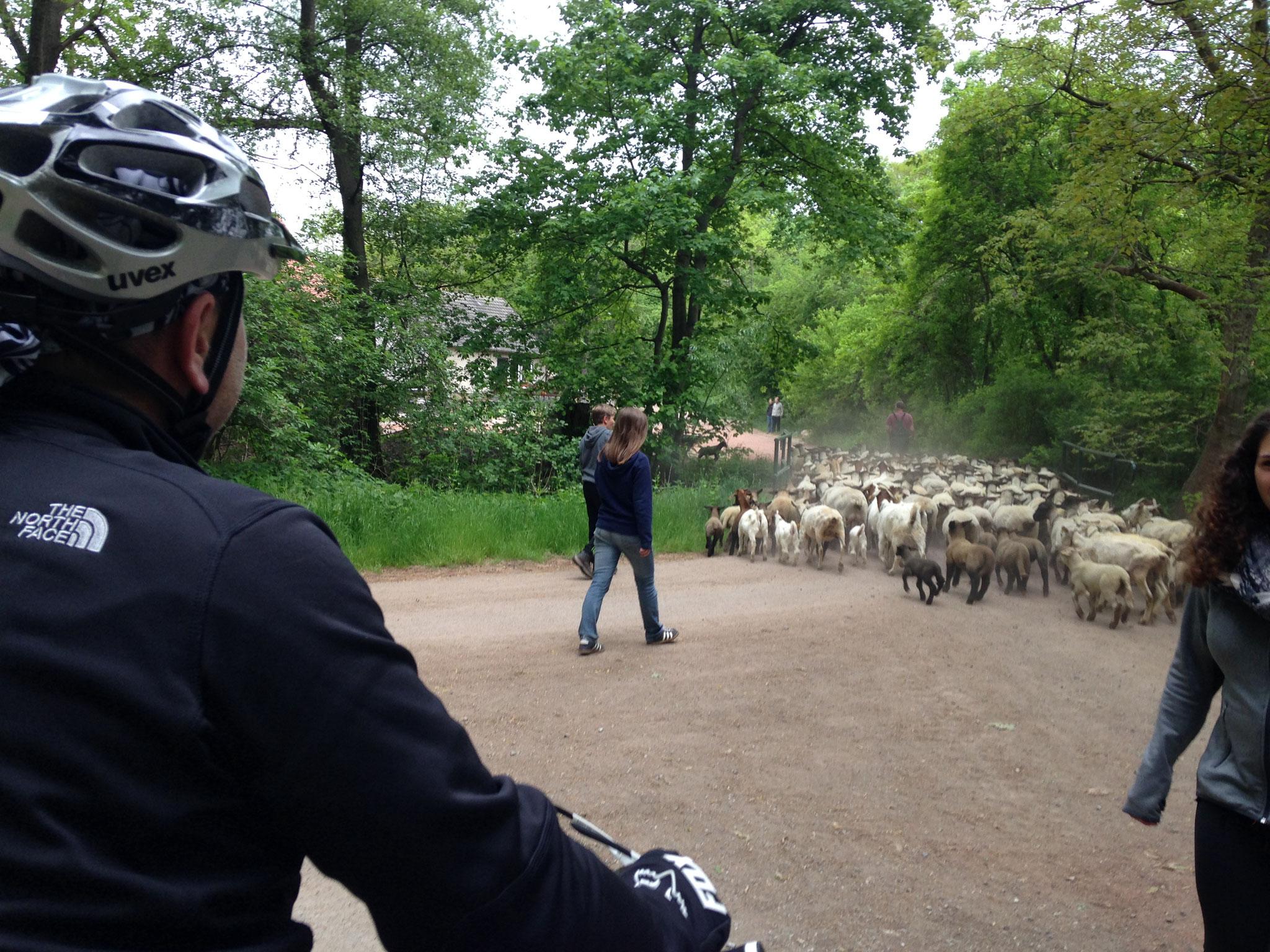Zufallsbegegnungen bei einer Radtour im Harz...