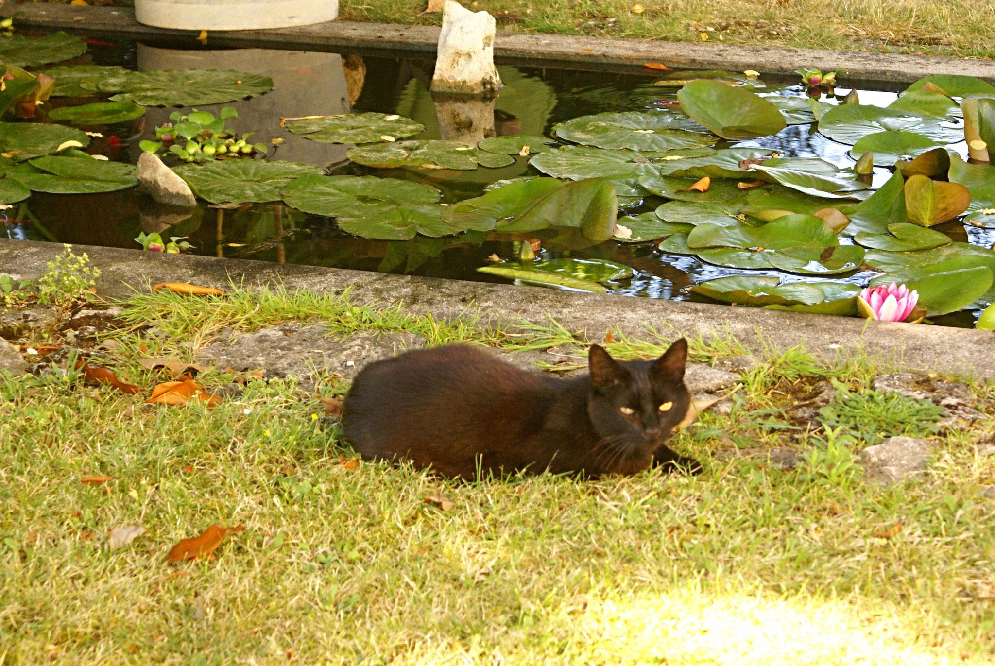 Moment de repos pour Titus le chat de la maison sur les bords du bassin aux poissons rouges
