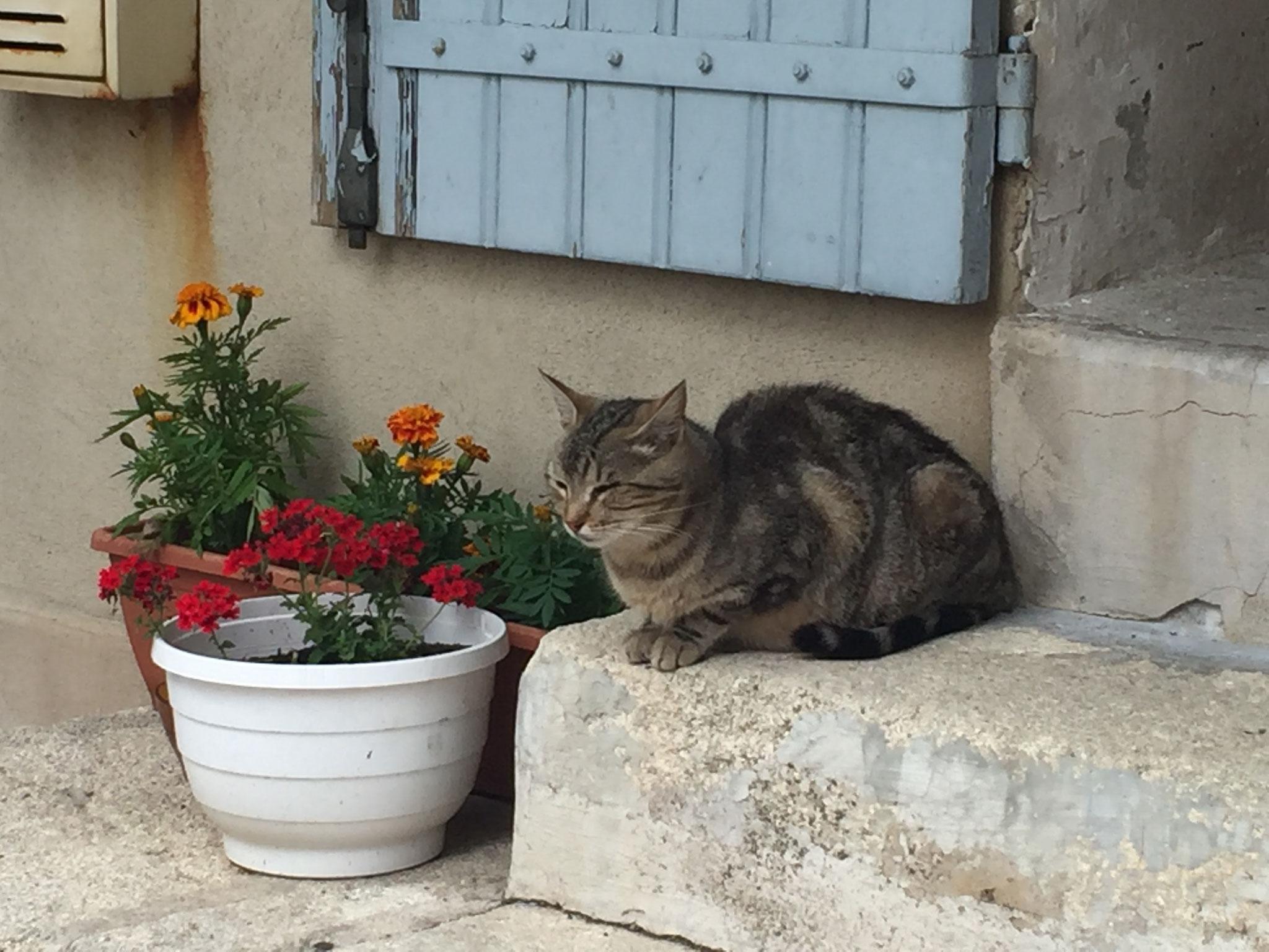 Chat provençal !