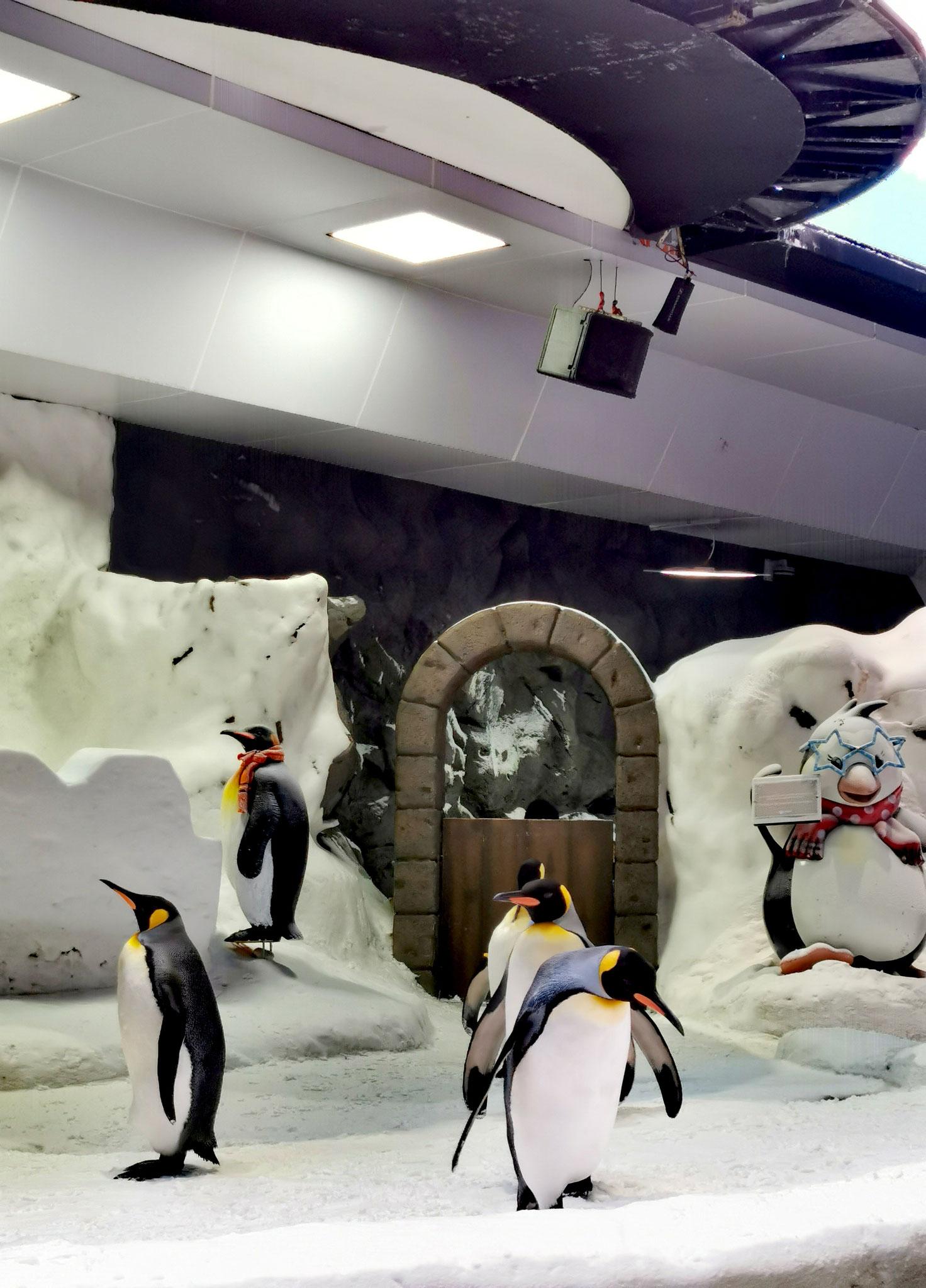 Meet the Penguins
