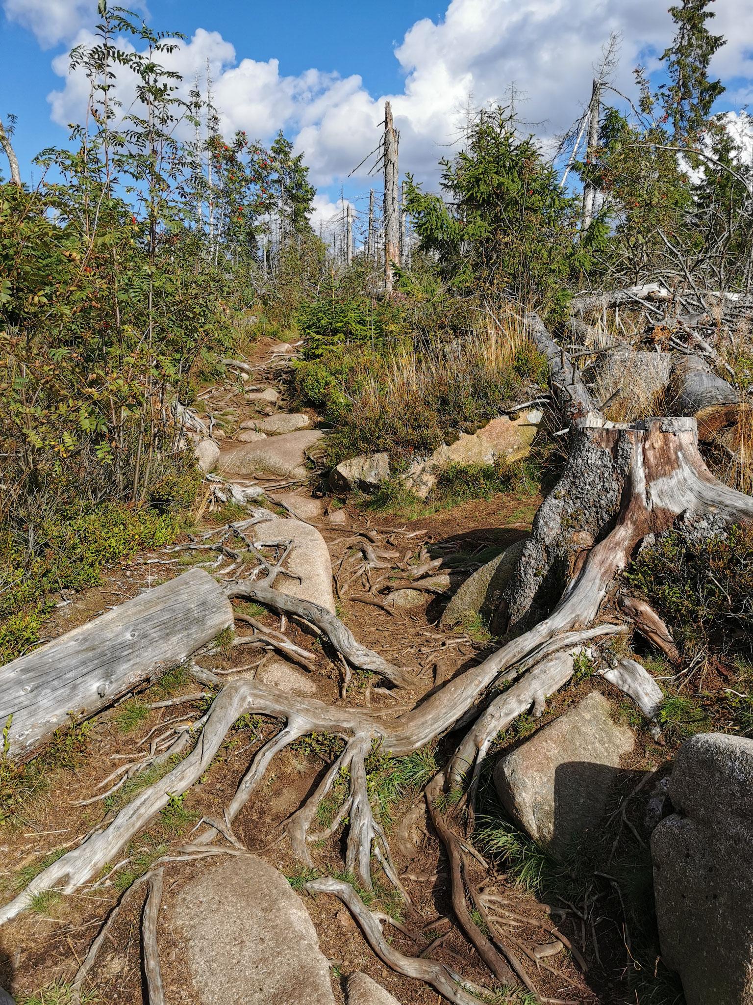 Ein Teil des Wanderweges besteht aus Steinen und Wurzeln