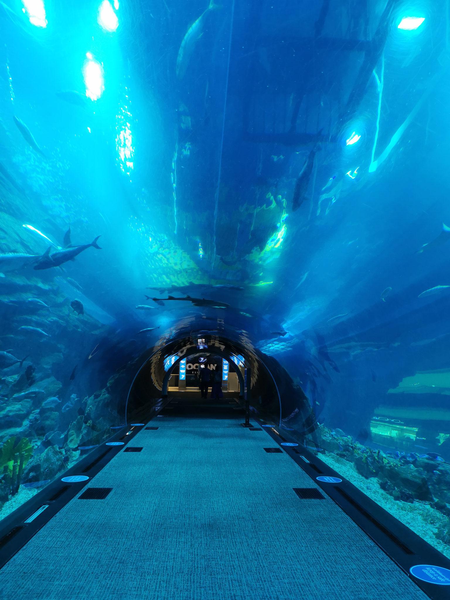 Der Unterwasser-Tunnel des Dubai Aquariums