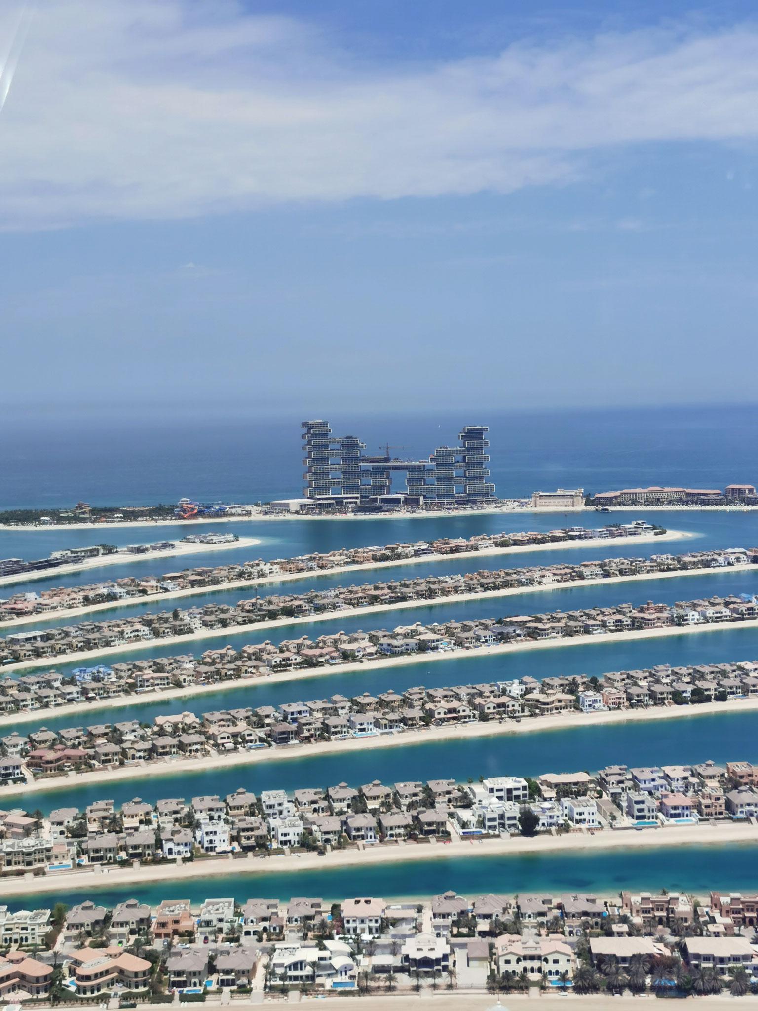 Blick auf die Palme und das The Royal Atlantis Resort