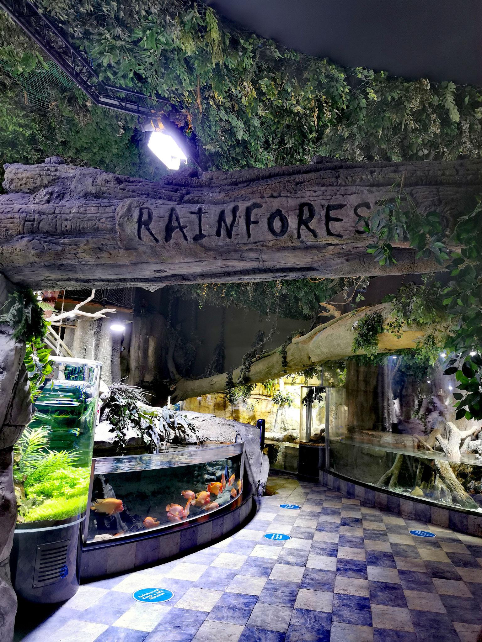 Der Underwater-Zoo des Dubai Aquariums