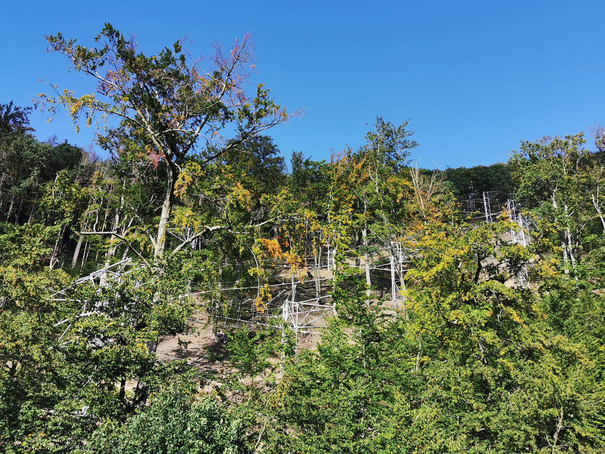 Der Wald zum Greifen nahe - Baumschwebebahn Harz