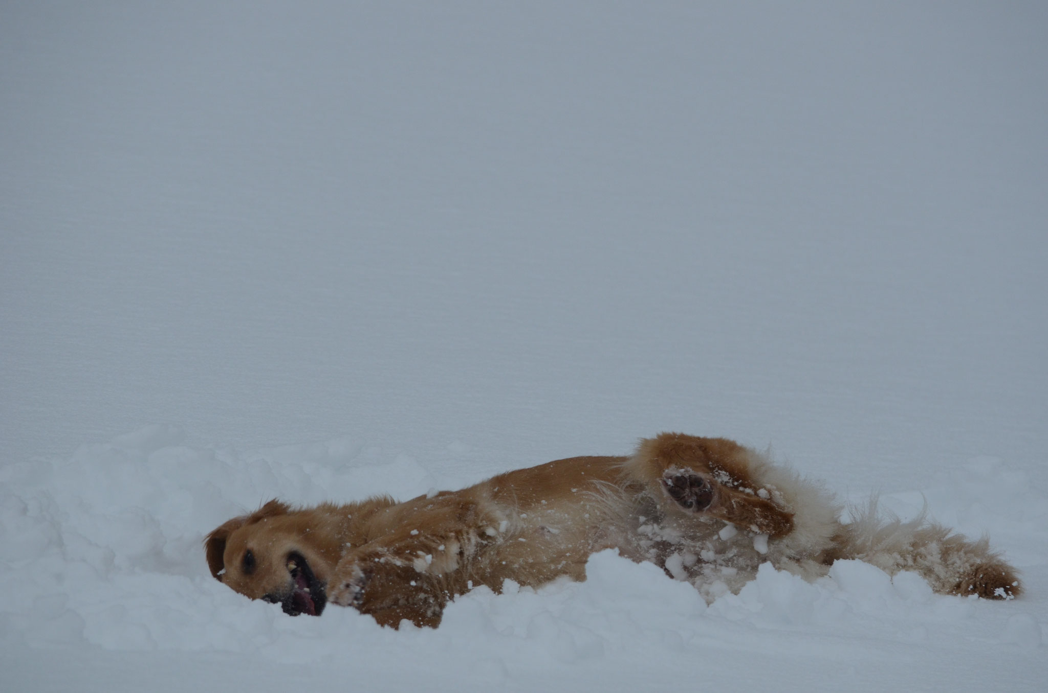Die Hunde geniessen den Schnee und wir sind froh, dass sie so schön sauber bleiben