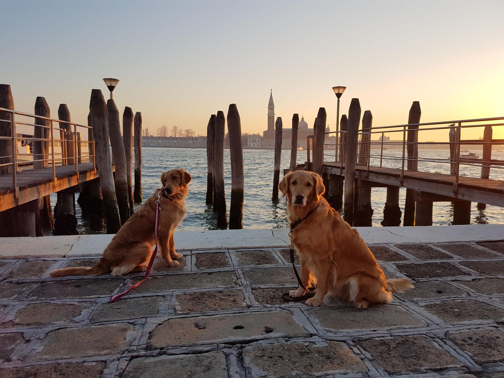 Die Italiener sind sehr freundlich und die Hunde überall willkommen