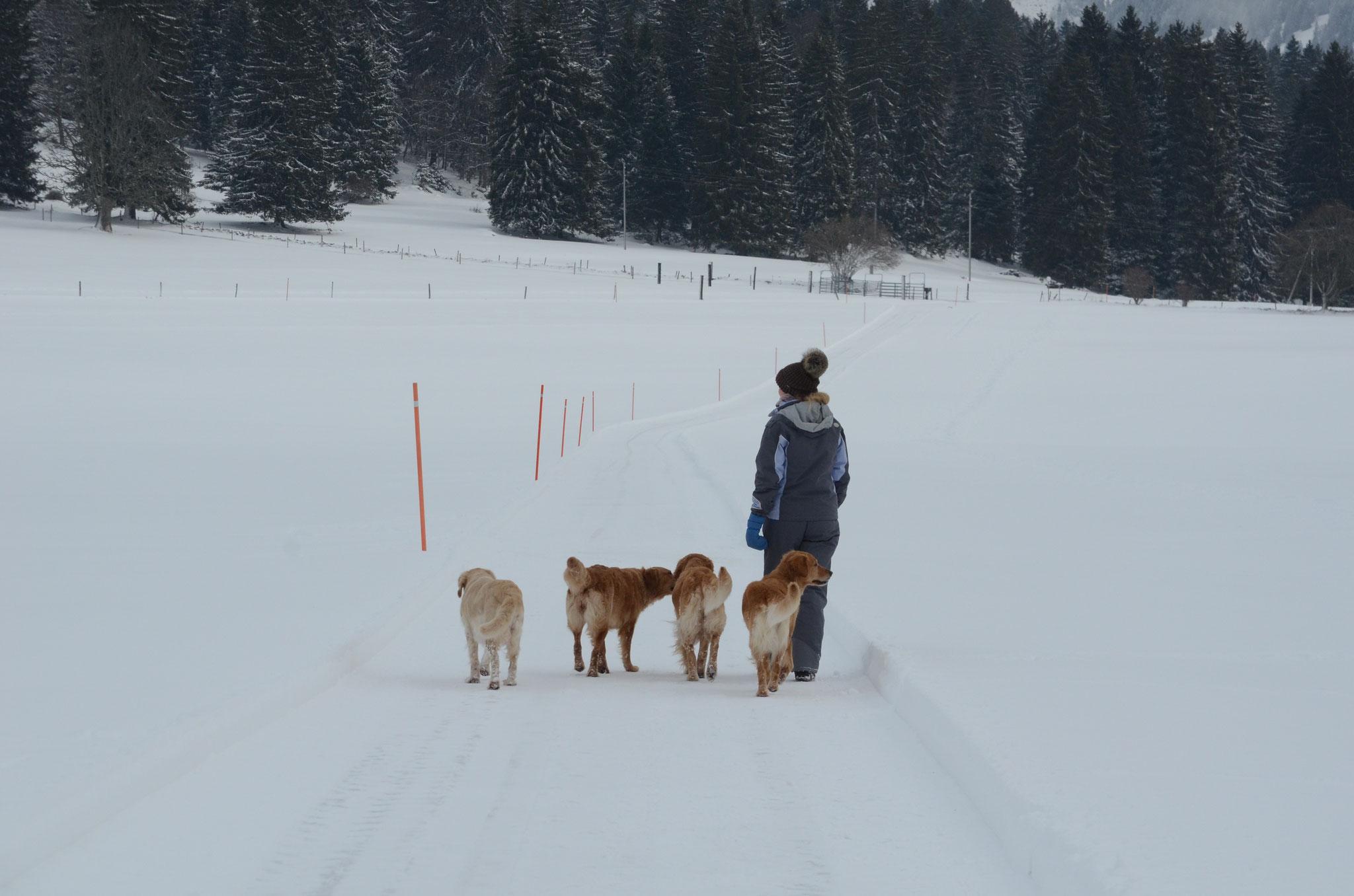 Denise und die Doggys