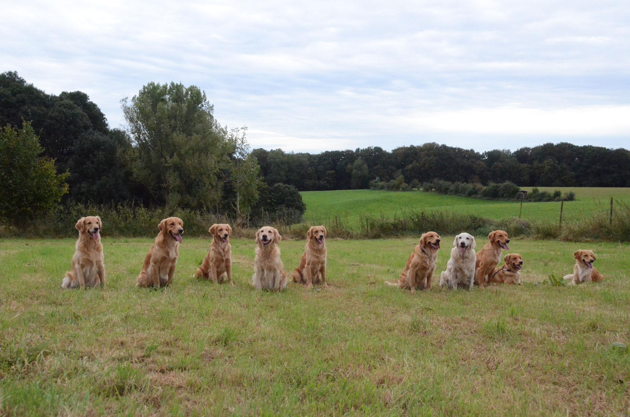 Einmal die Hunde ohne Menschen - die Renssors