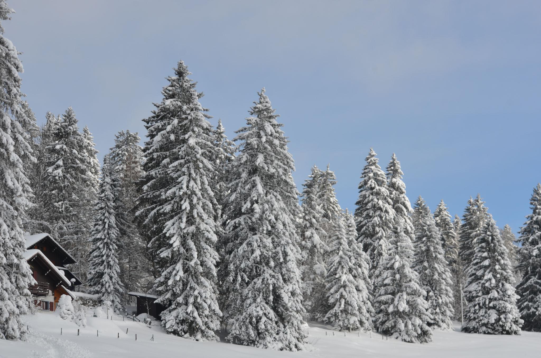 Heftige Schneefälle haben den Himmer immer bedeckt, aber hier mal mit Sonne