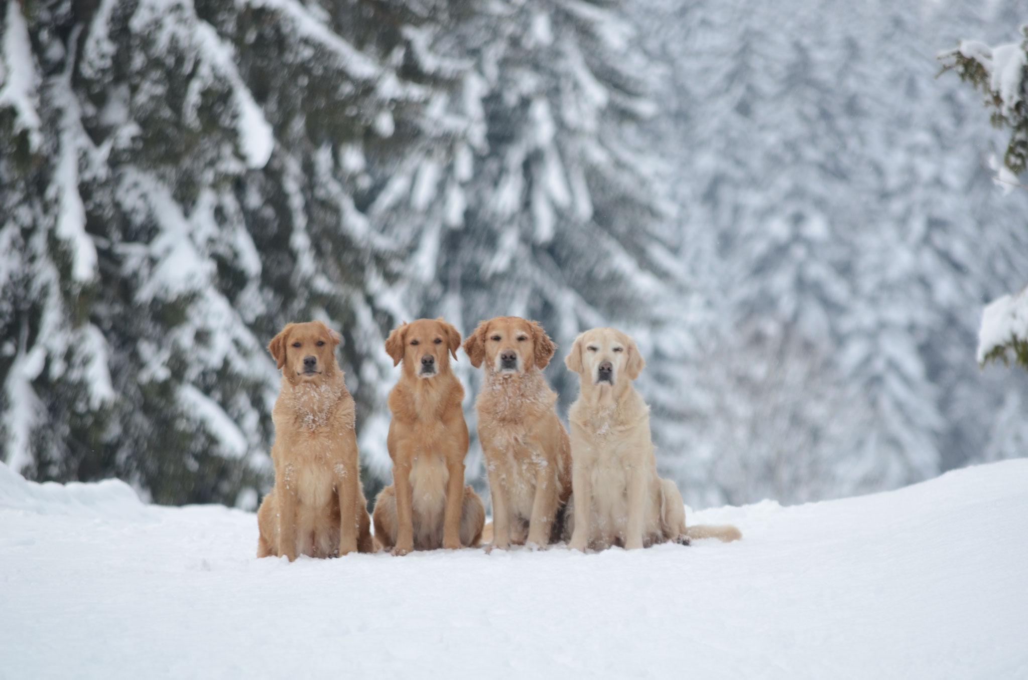 4 Mädels im Wald