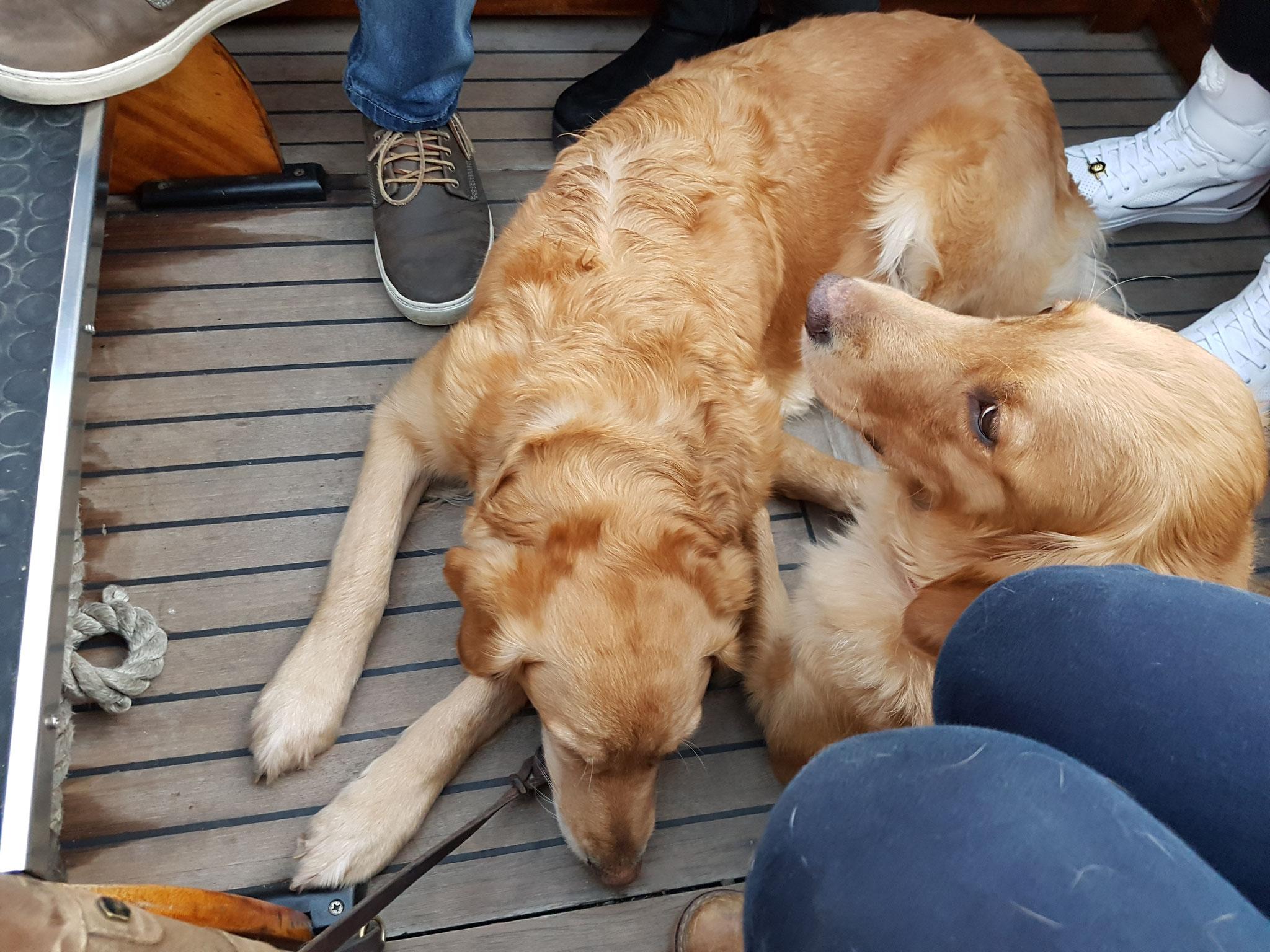 völlig relaxed haben die Hunde alles mitgemacht