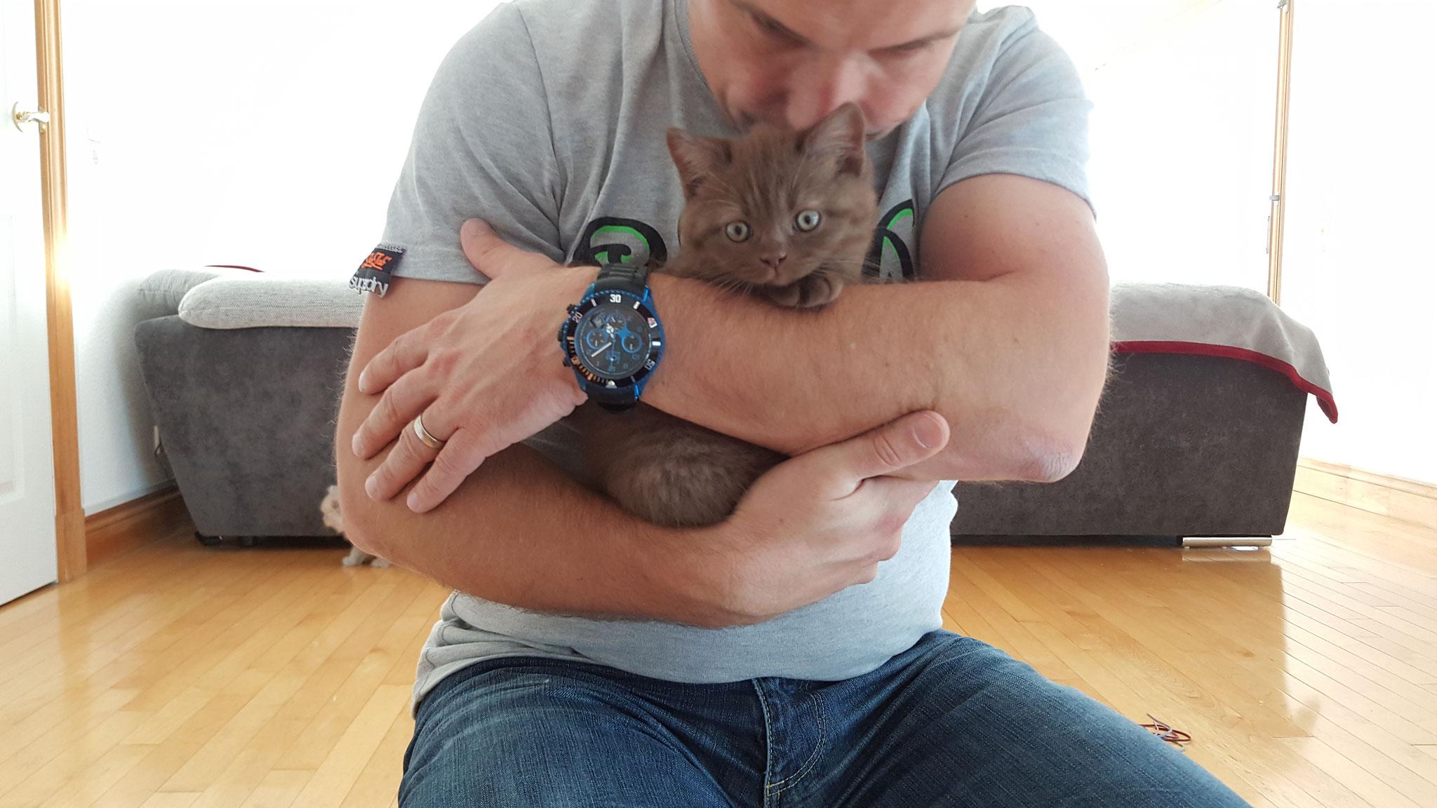 Kätzchen, Kater und Co