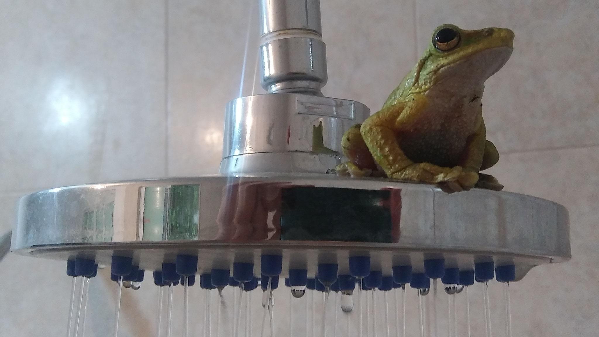¡bienvenido a gozar tu ducha caliente en SEMUK! / herzlich willkommen zu einer heissen Dusche in SEMUK!