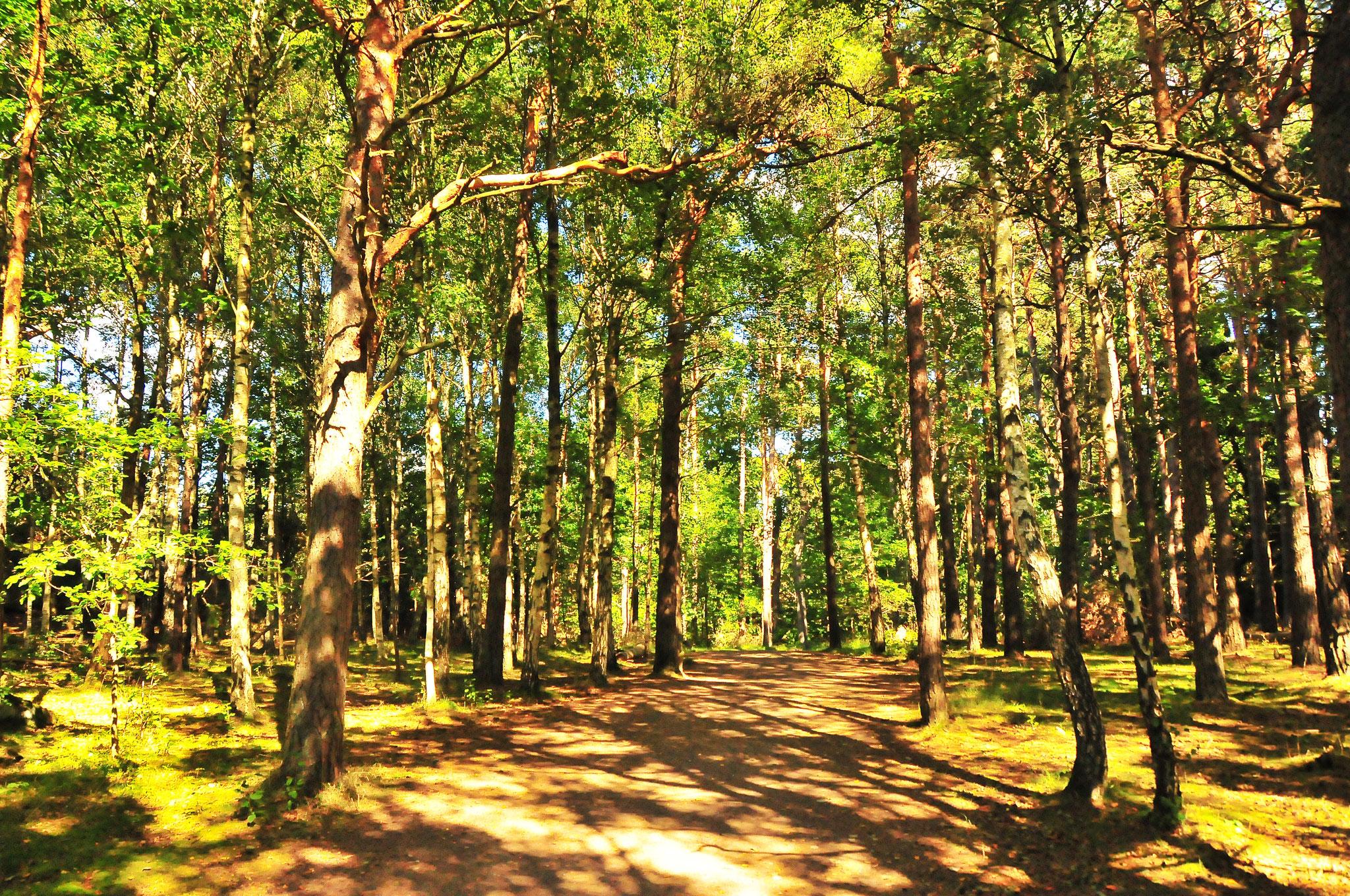 Tree Abundance