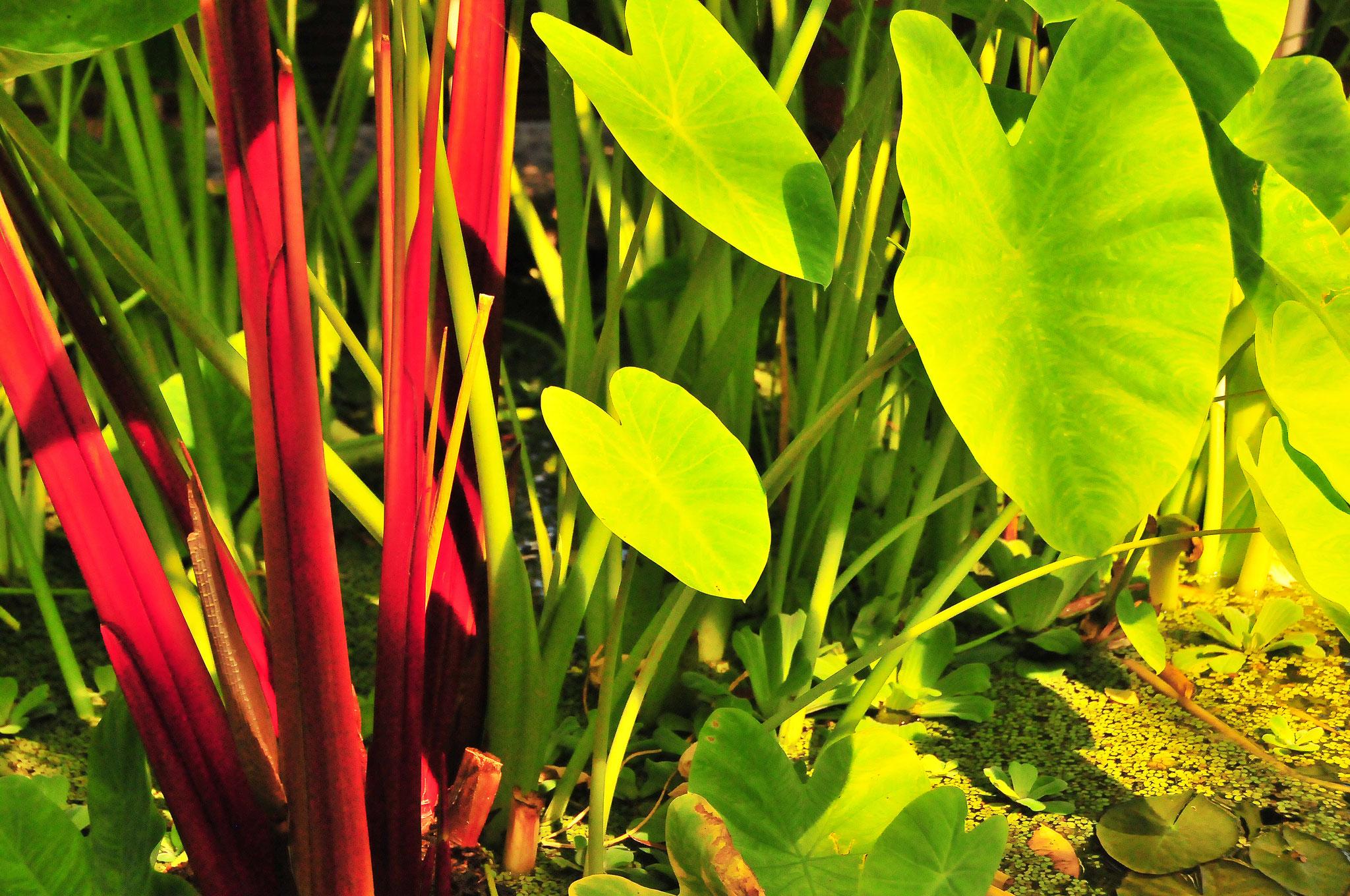 Botanic Bliss