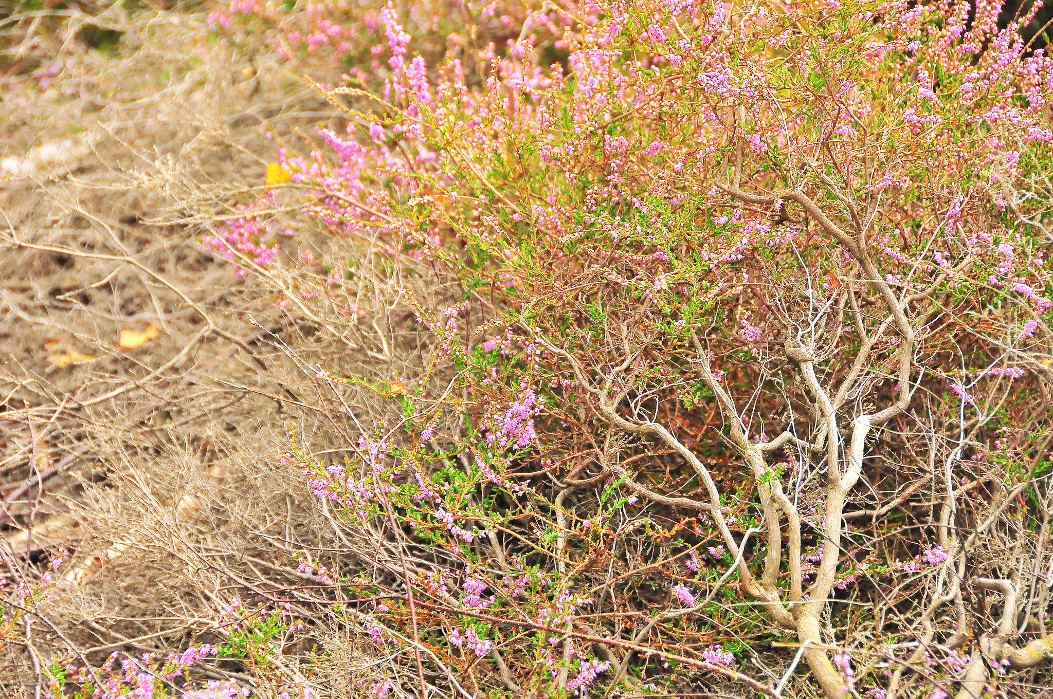 Bush Beauty