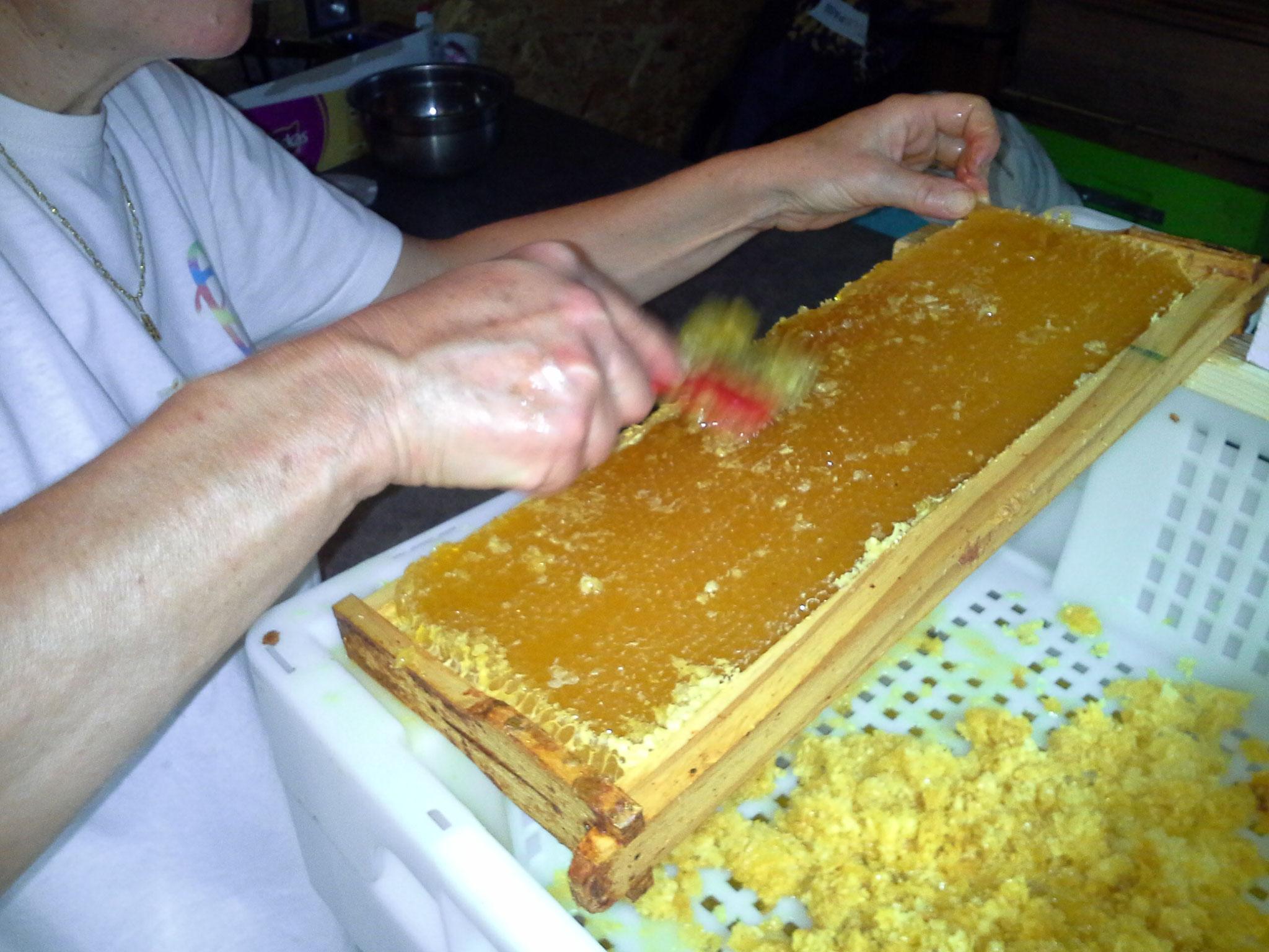récolte du miel de la mesquire