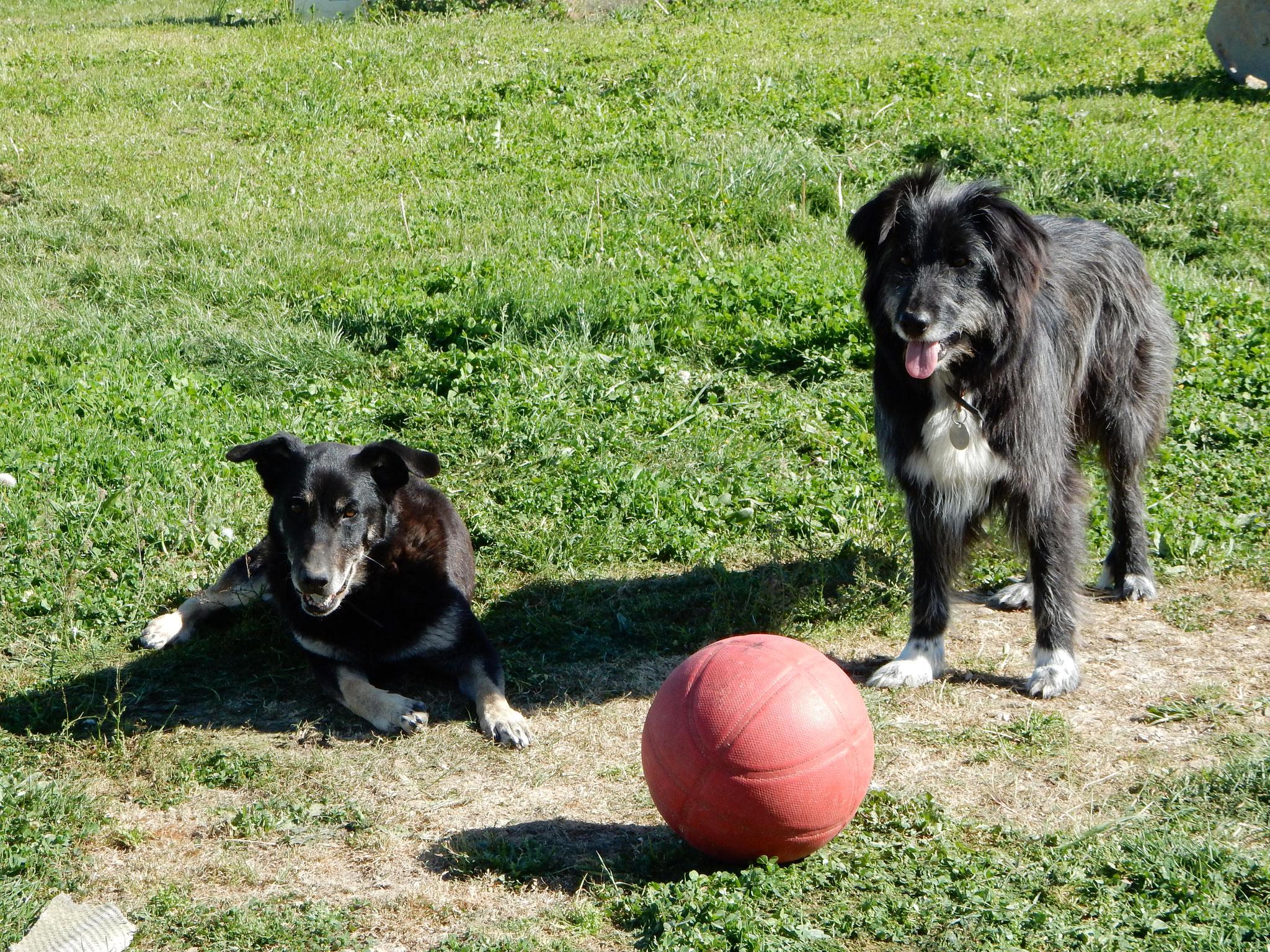 Choco et Réglisse les  deux chiennes de la mesquire