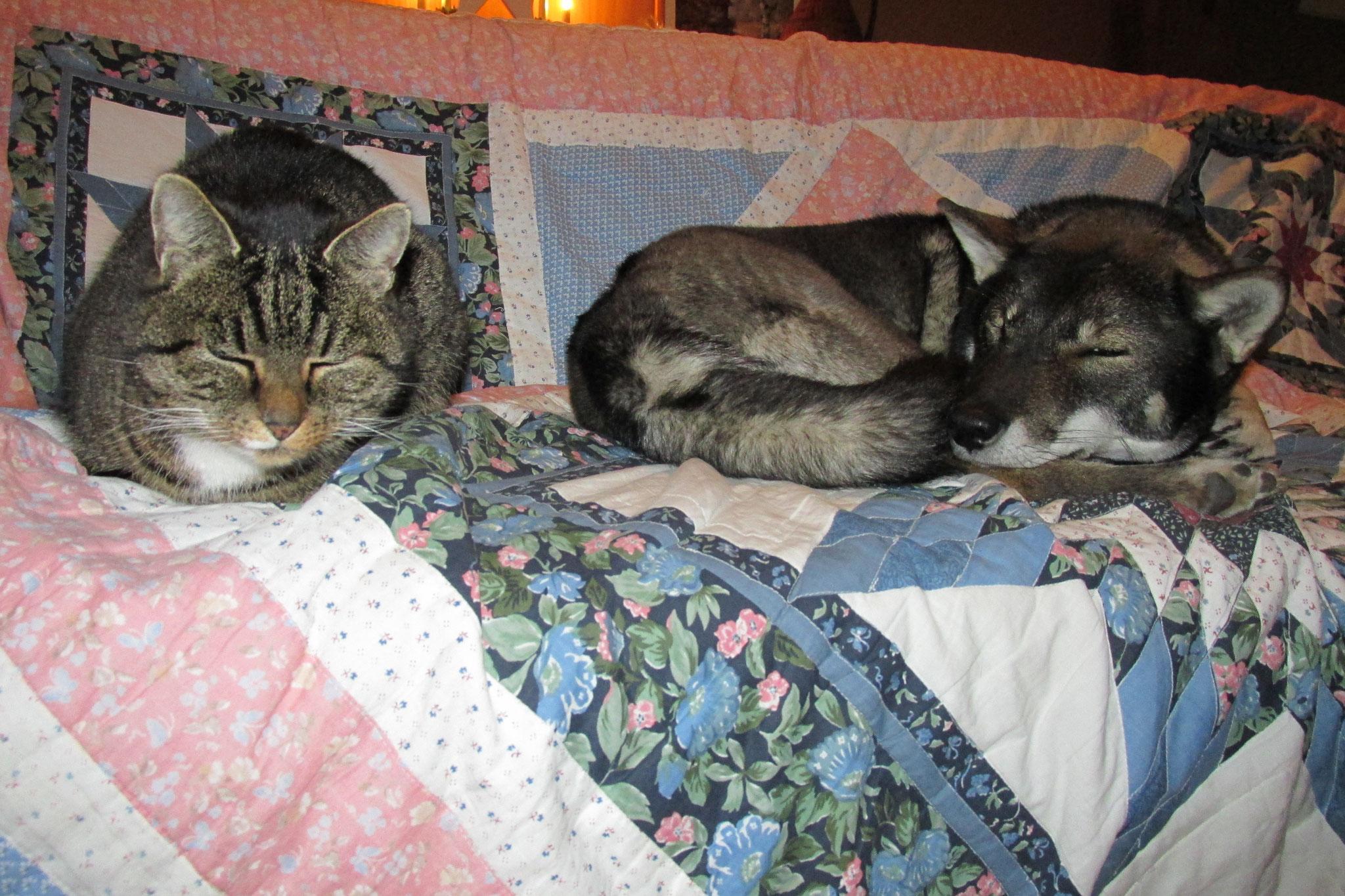 Puk, eine unserer drei Katzen