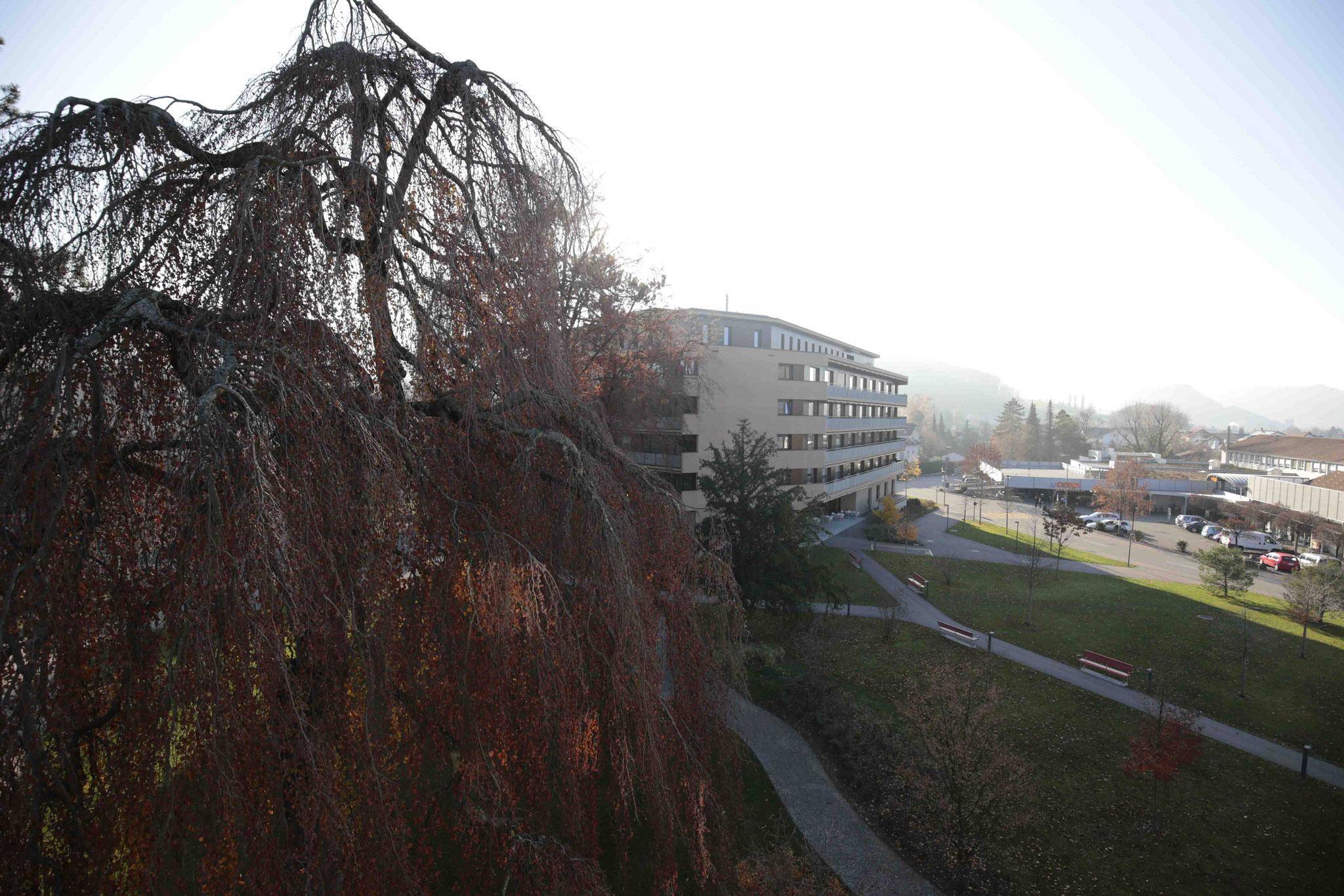 Ausblick vom Wohnzimmer Richtung Park und Altersheim