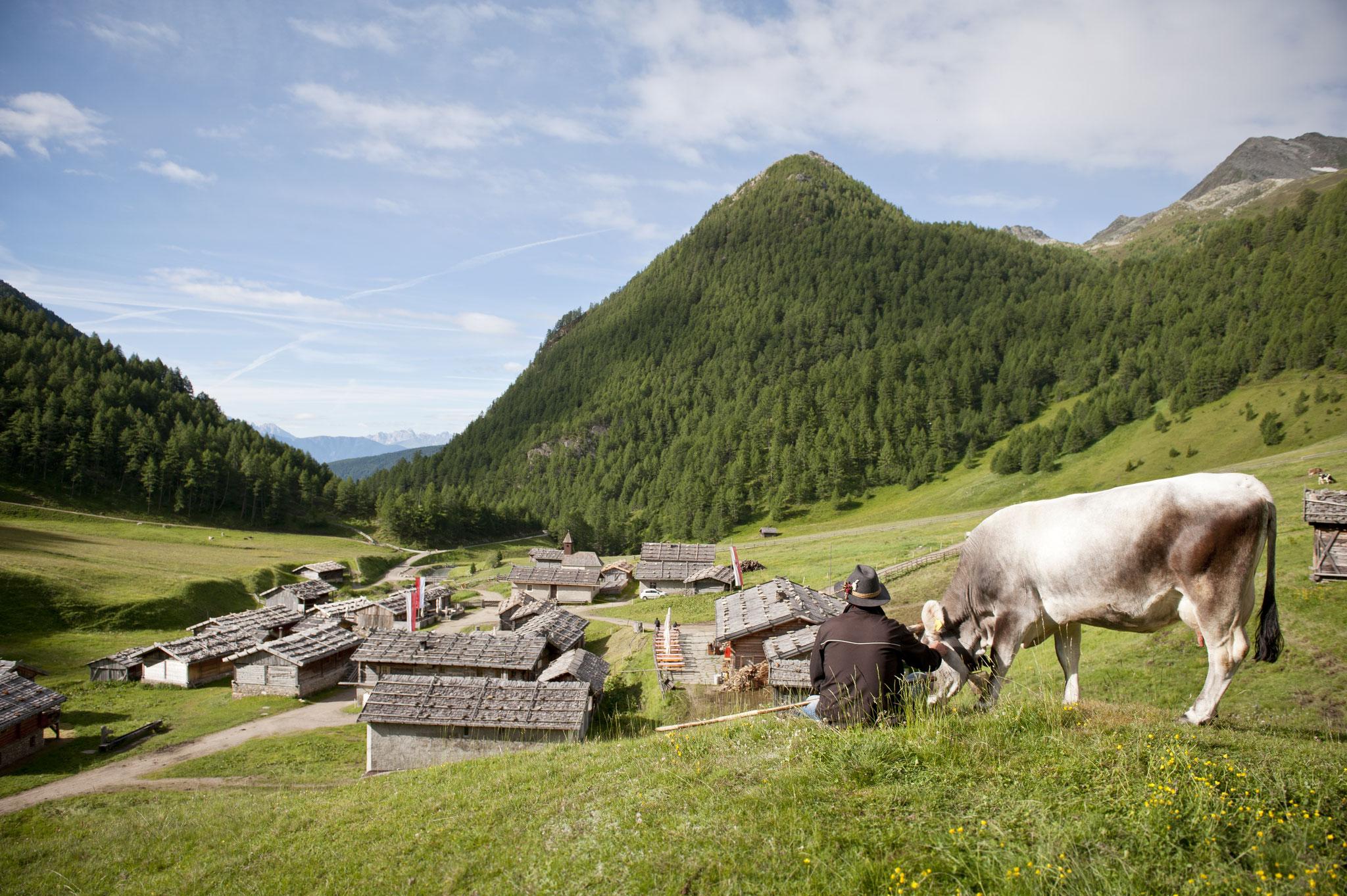 Fanealm in Gischberg Jochtal