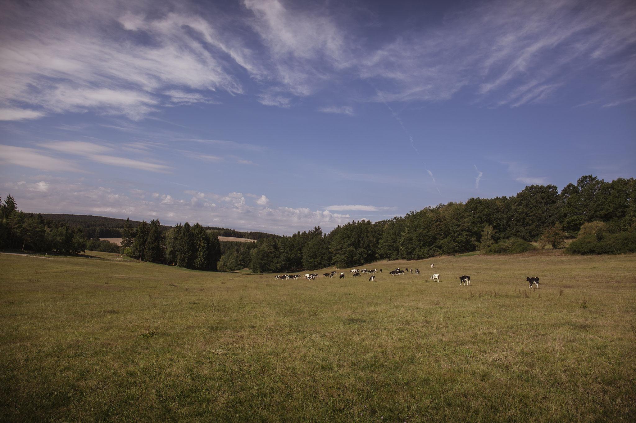 Unsere weitläufigen Flächen bieten genug Platz für unsere Tiere.