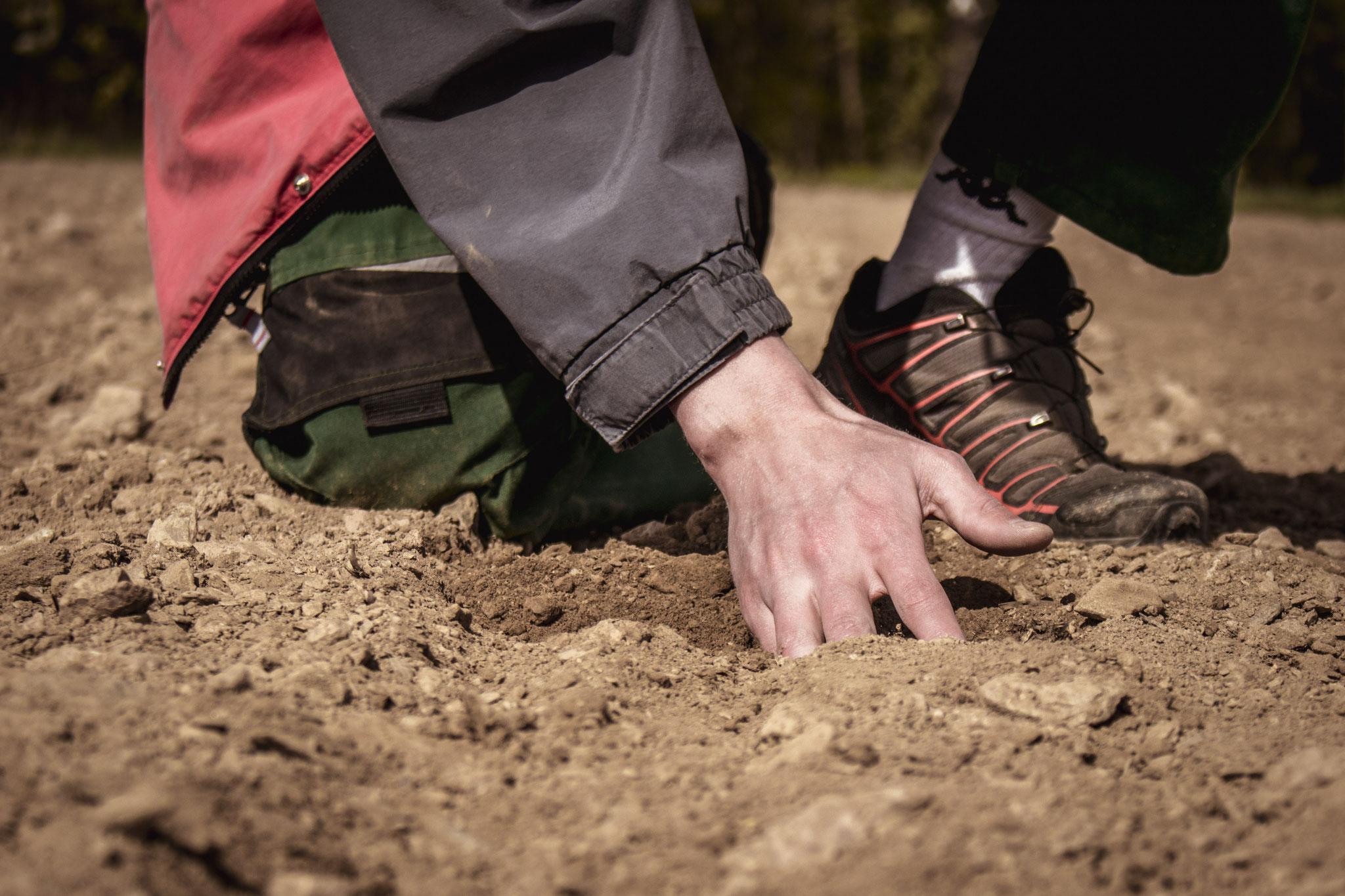 Der Boden ist die Grundlage unseres Wirtschaftens. Seine Gesundheit und Fruchtbarkeit ist für uns von besonderer Bedeutung.