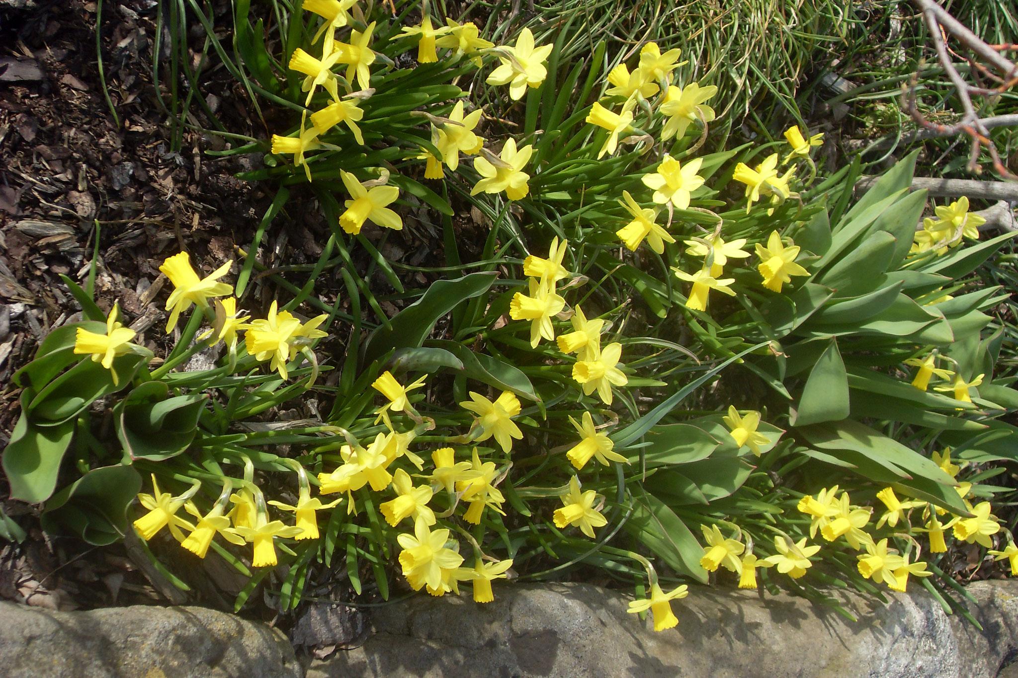 Blumen 2016-5