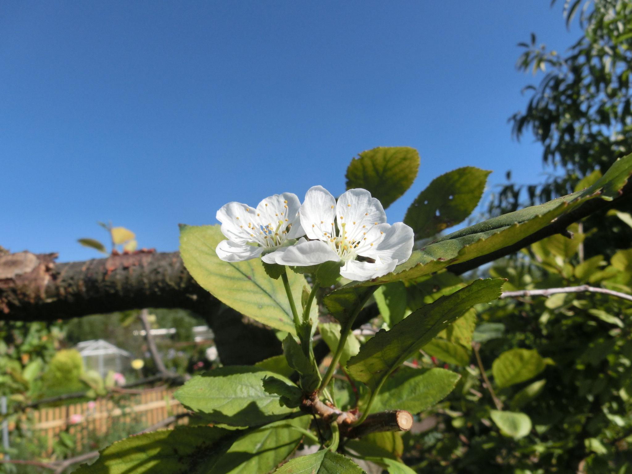 Blüten 2016-2
