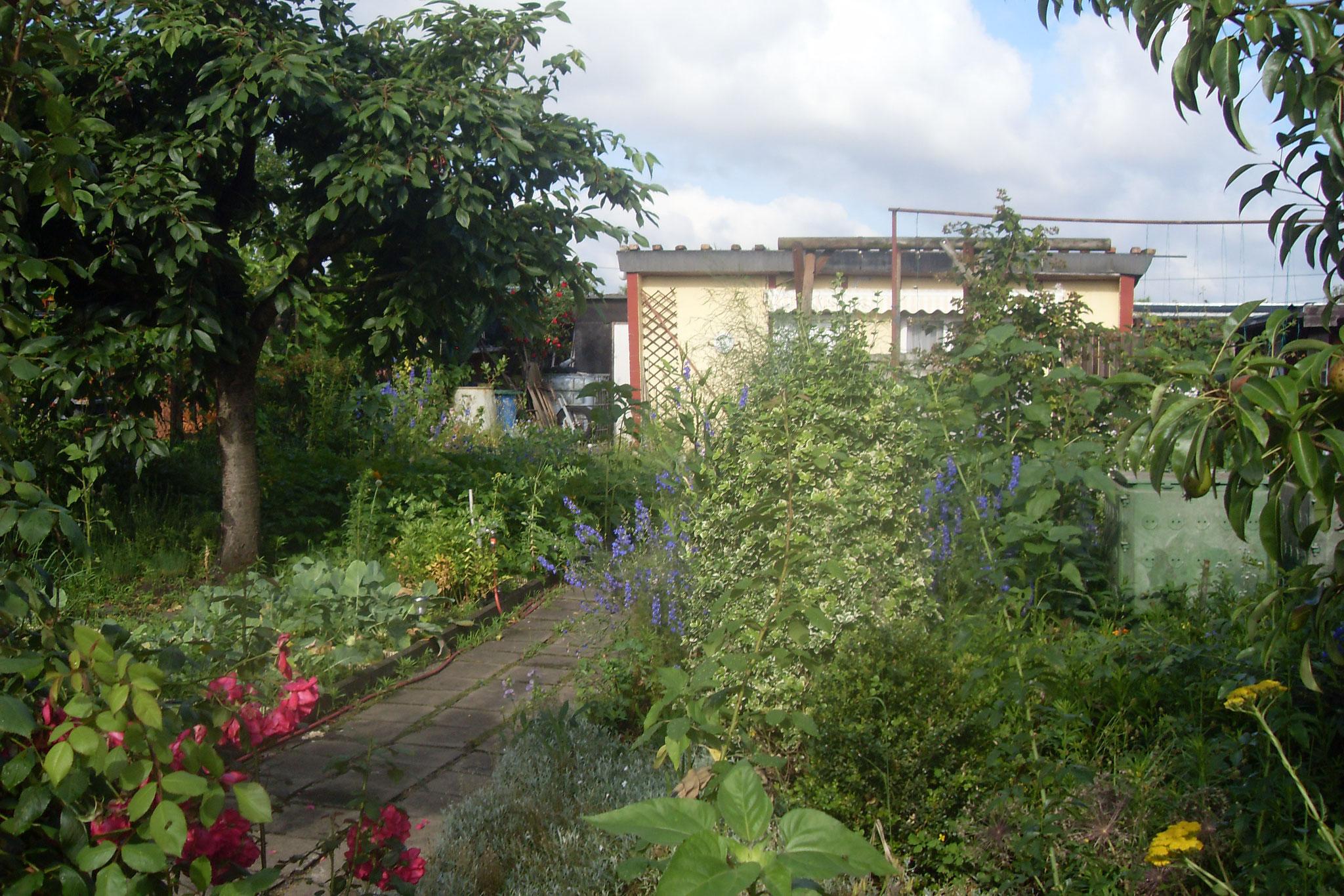 Garten 2016-7