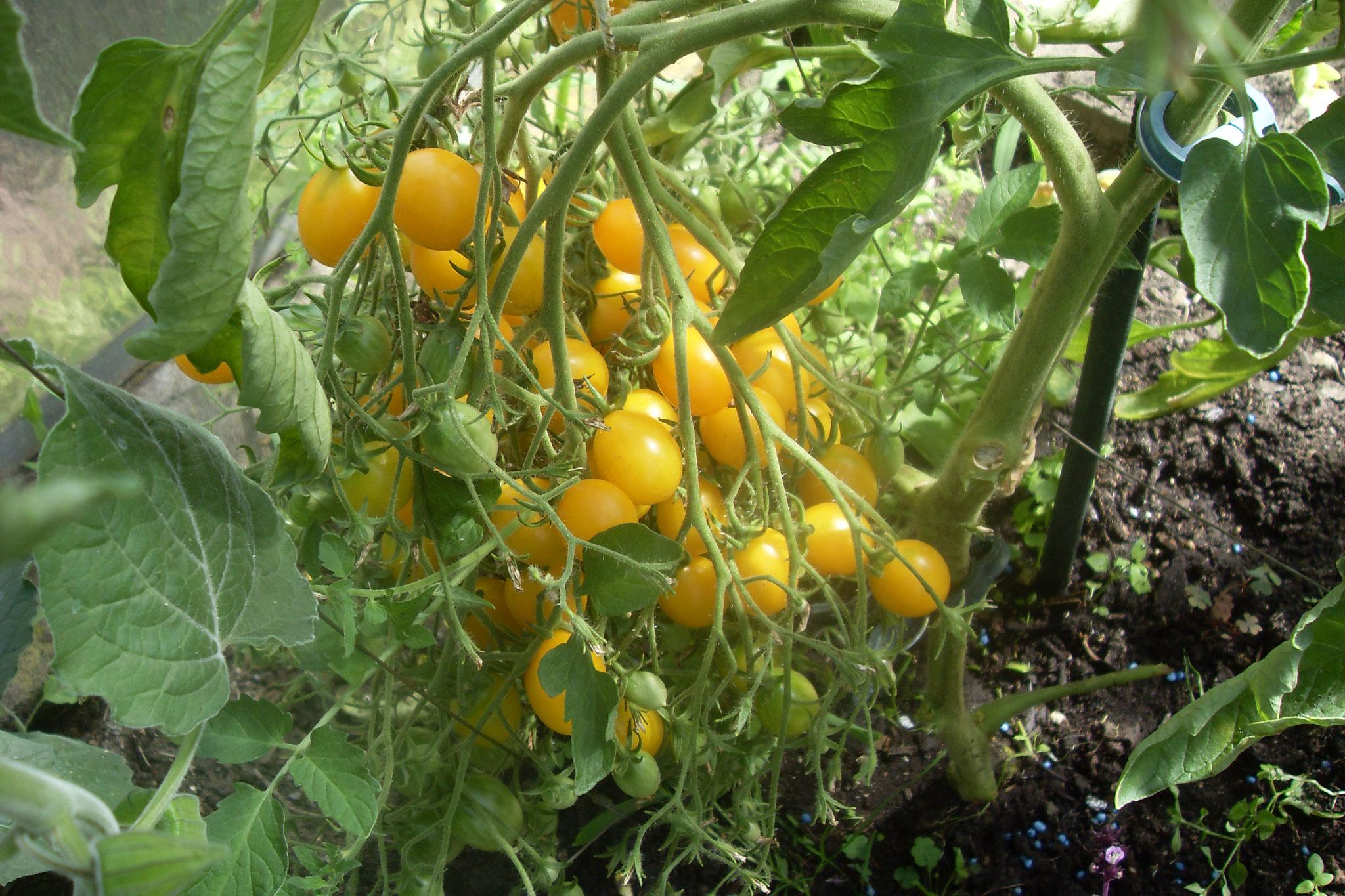Gemüse 2016-1