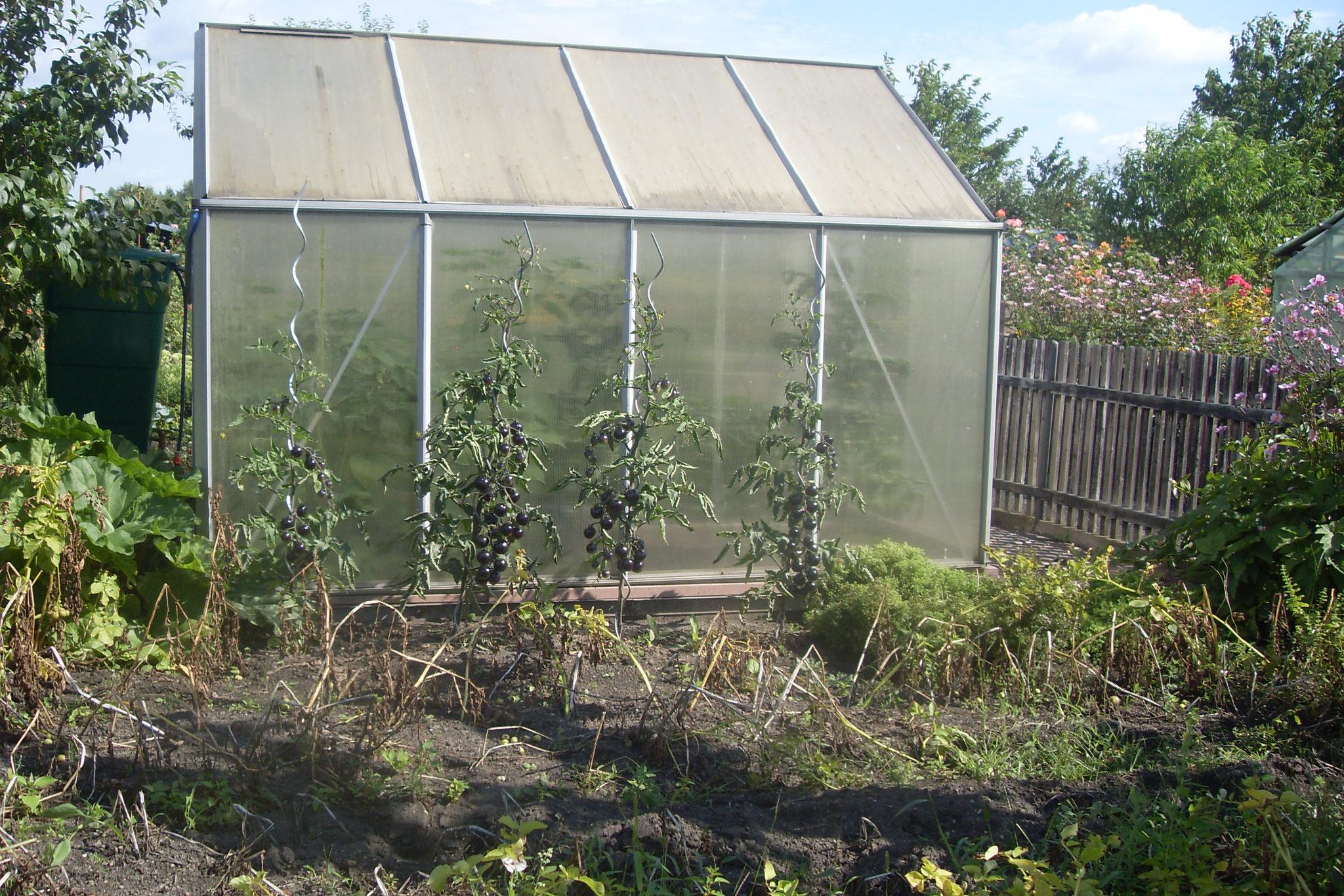 Garten 2016-17
