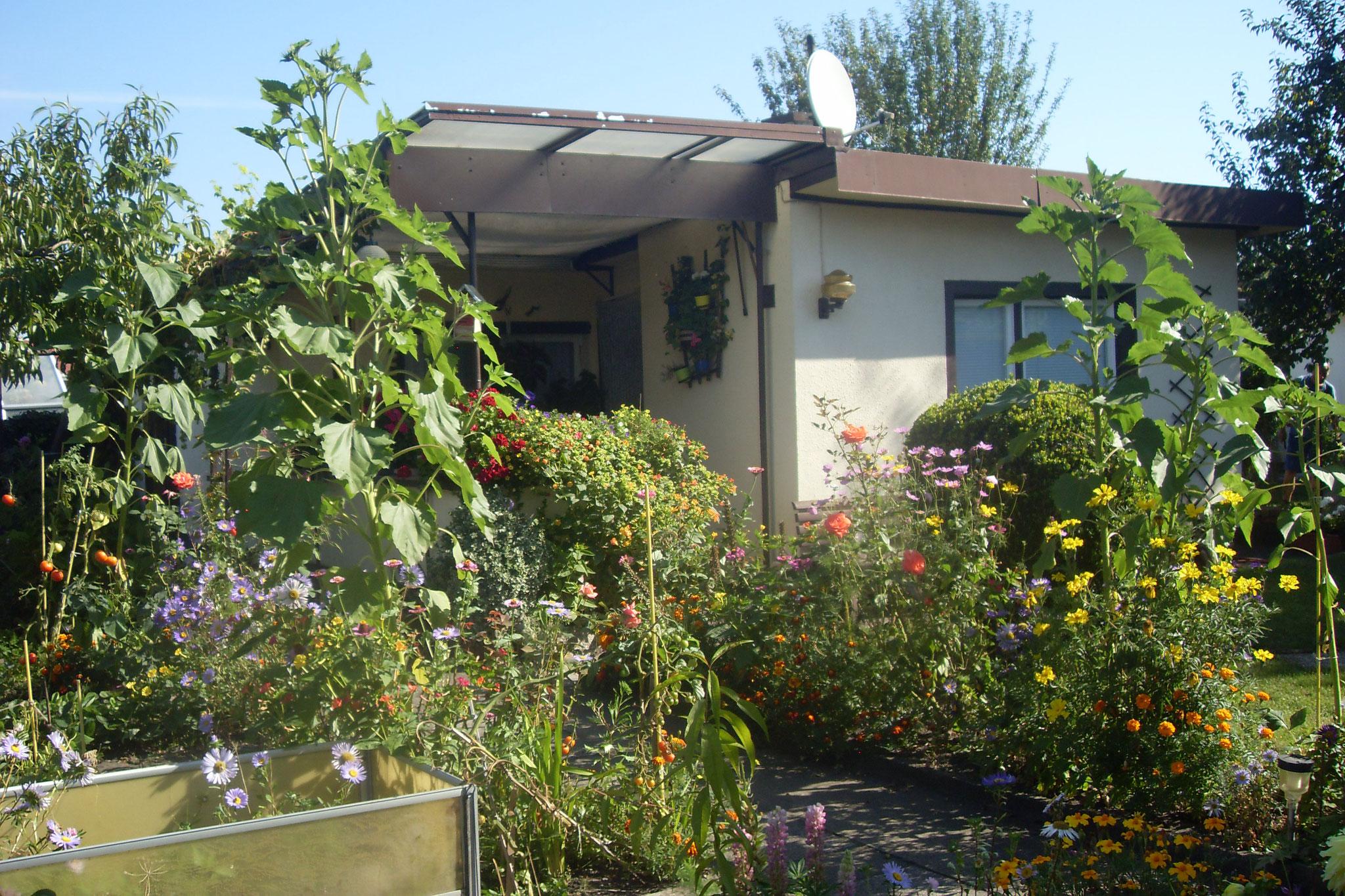 Garten 2016-21
