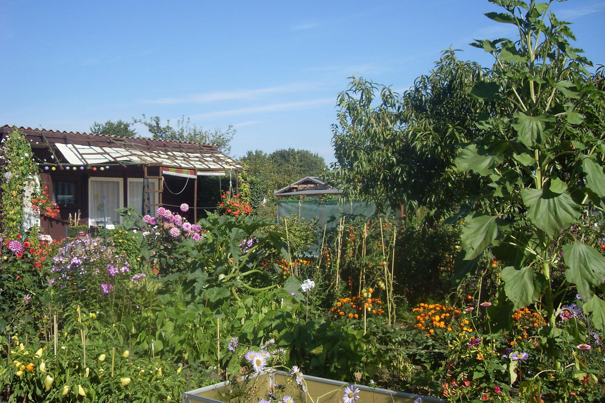 Garten 2016-22