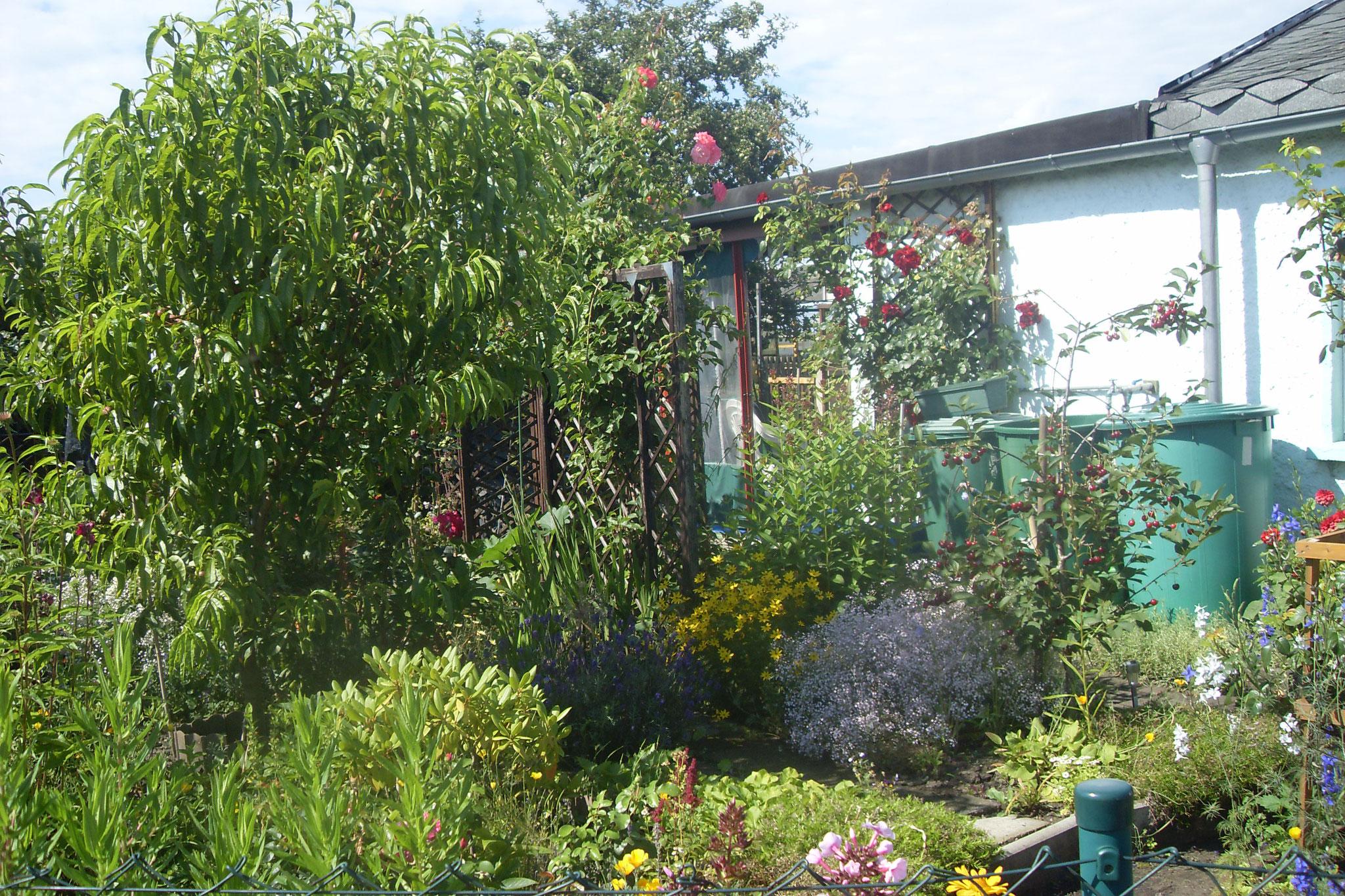 Garten 2016-25