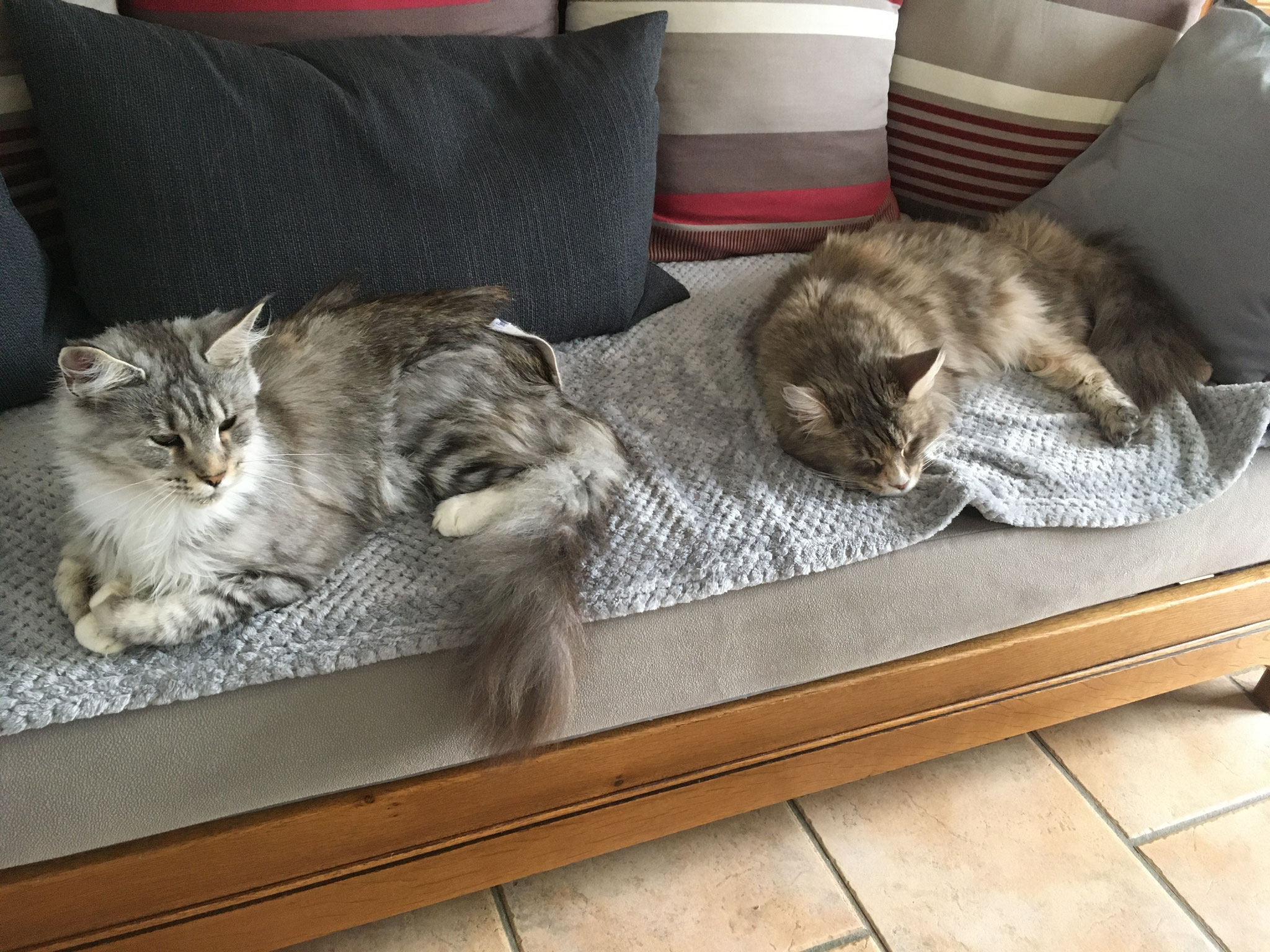 Les places du canapé sont chères...