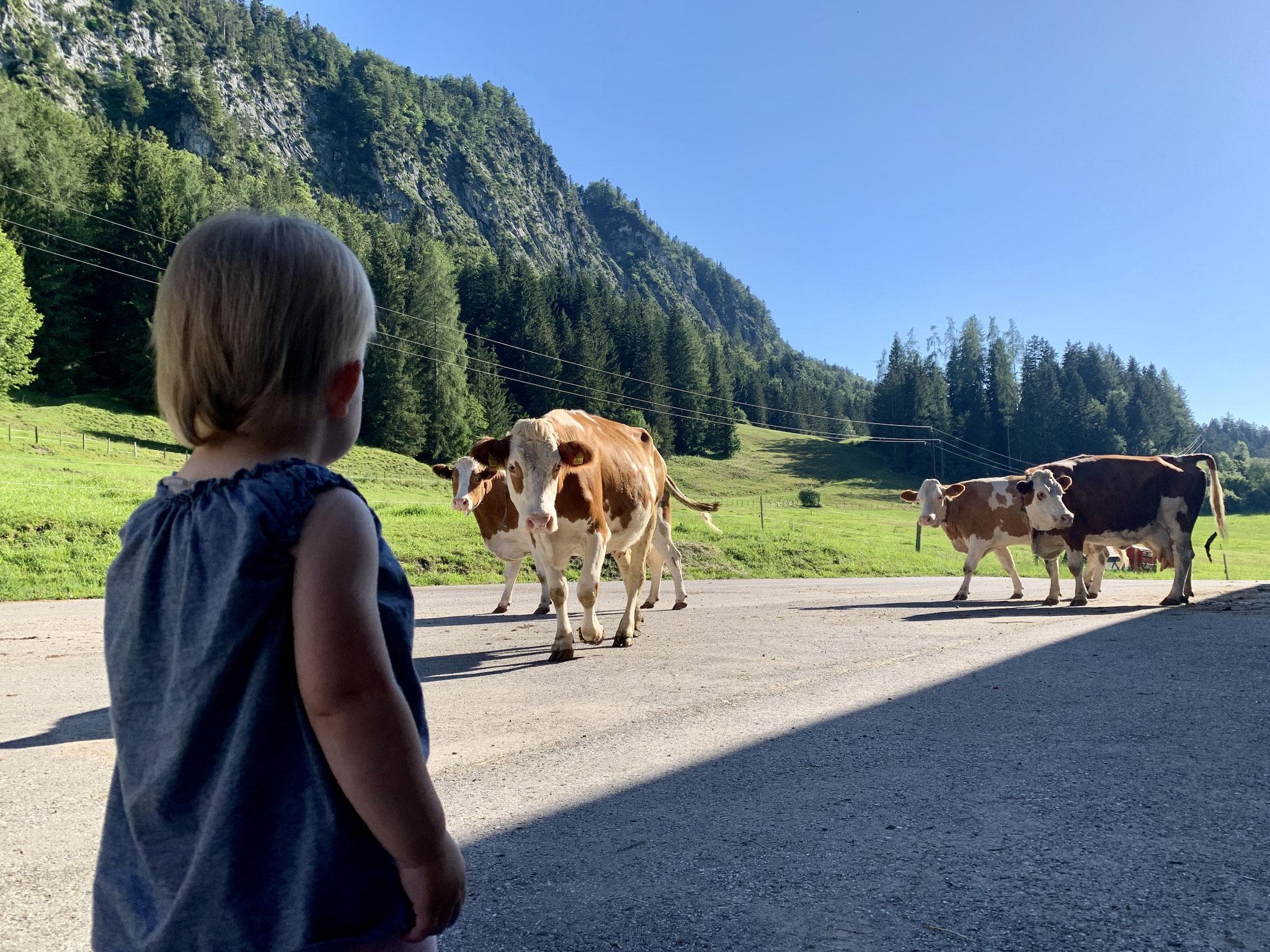 Unsere Kleinste beim Kühe beobachten