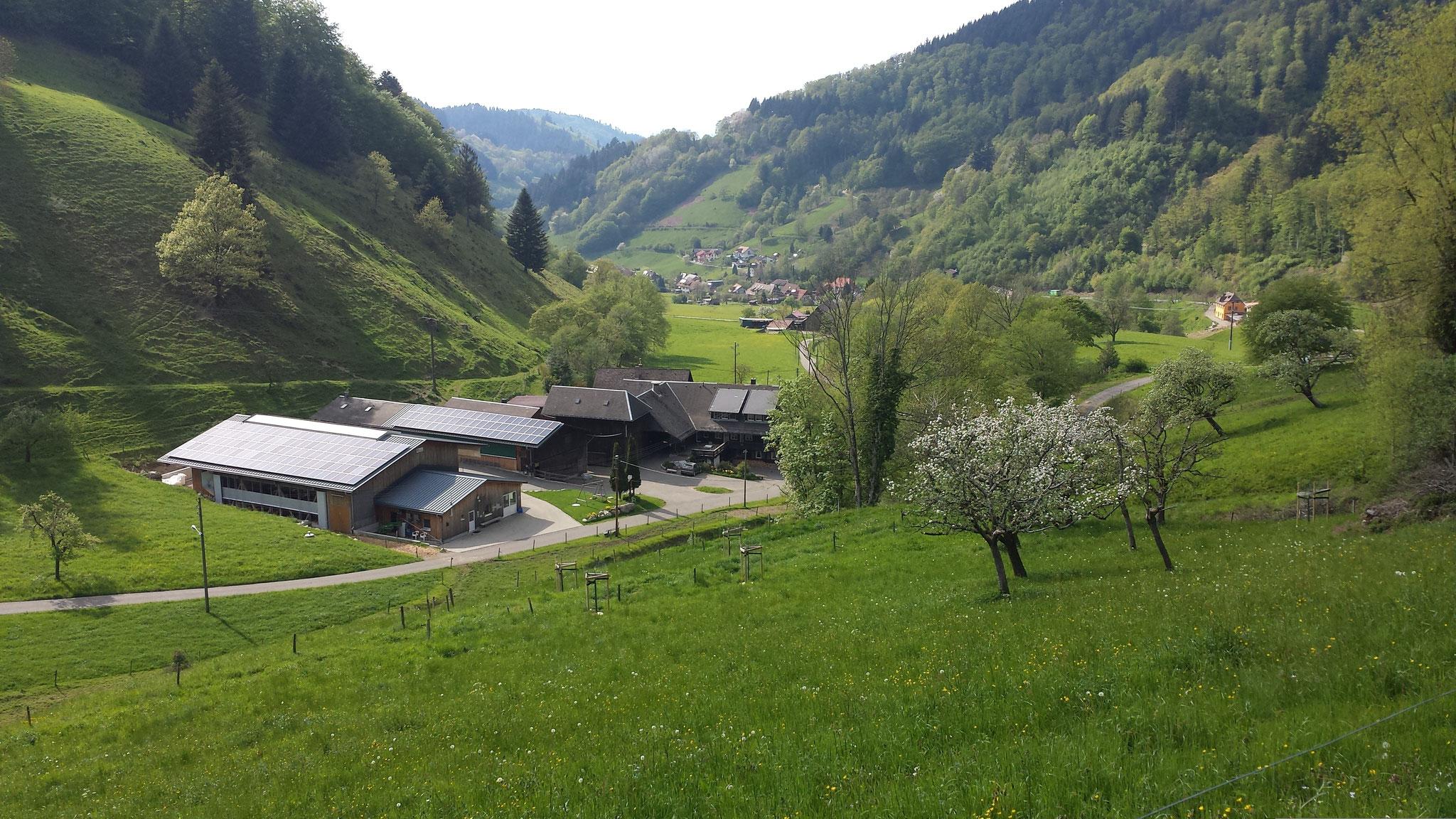 Ausflug Münstertal zum Glöcklehof    (Geißenzucht)