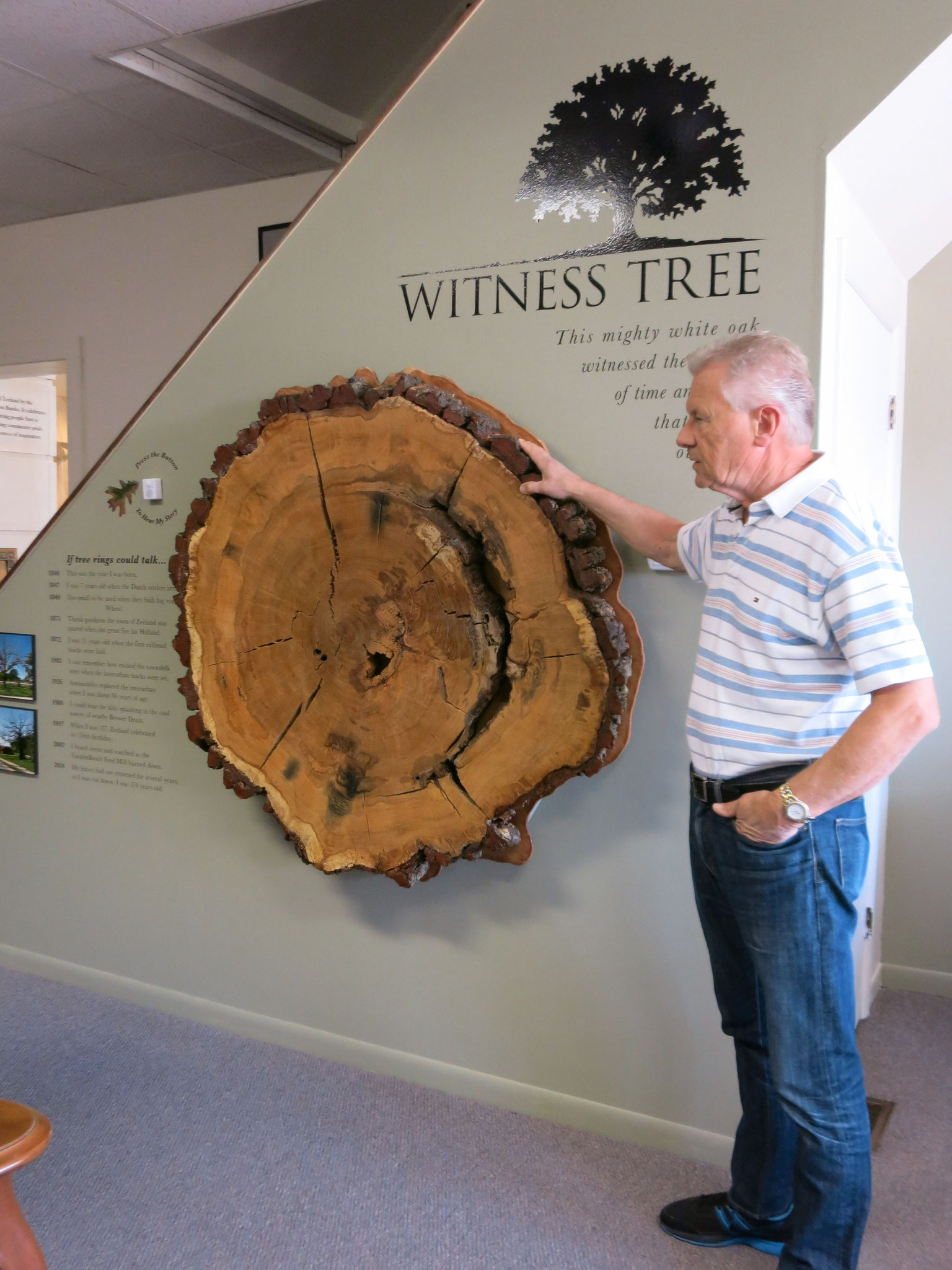 Keith Boonstra shows the newly mounted Witness Tree. Photo courtesy Zeeland Historical Society.